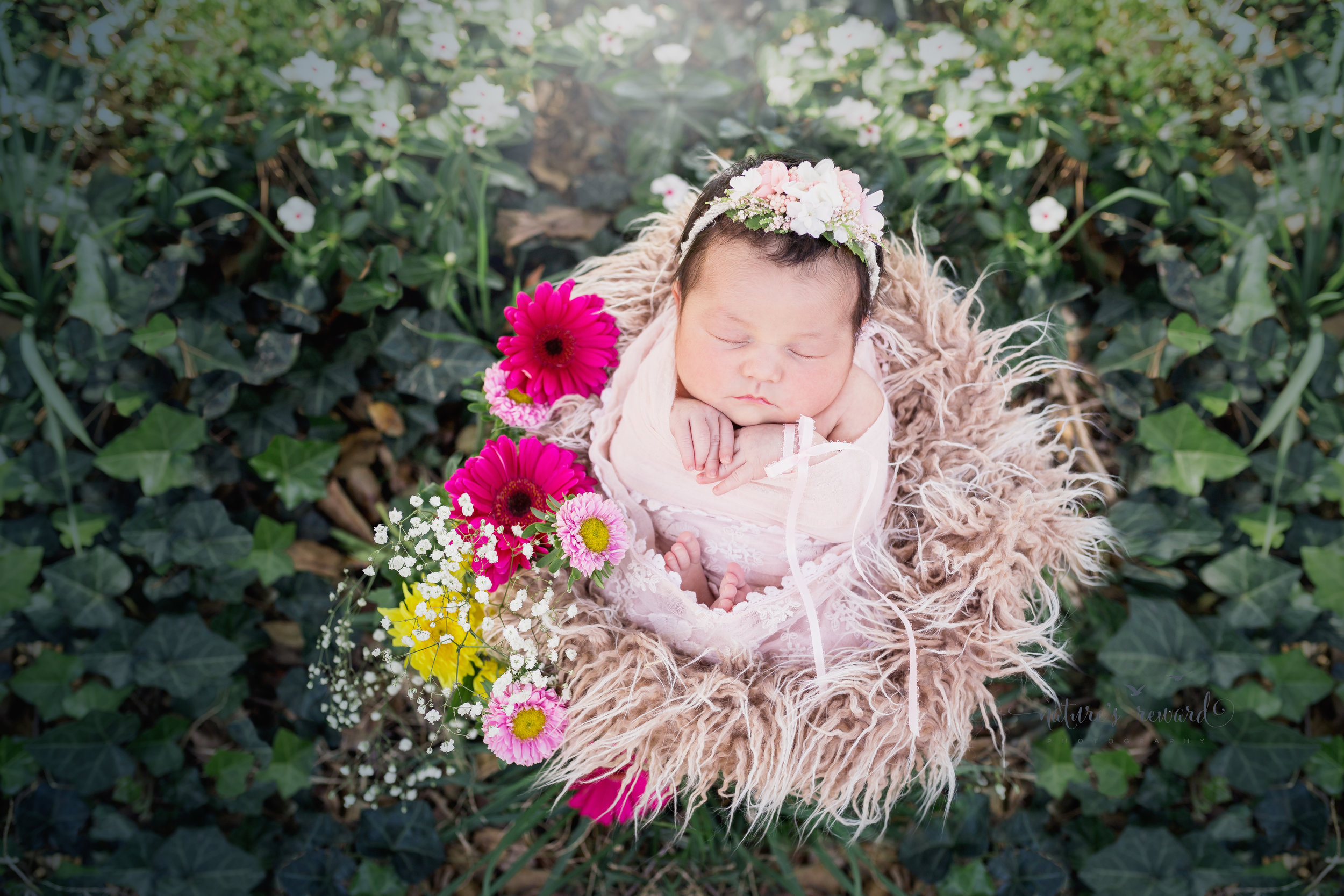 This sweet newborn baby girl portrait in a bucket of fur in an ivy garden with accented flowers while she is swaddled in pink and lace wearing a flower crown and a pink ribbon bracelet in this piece by Southern California Newborn and Family Photographer Nature's Reward Photography