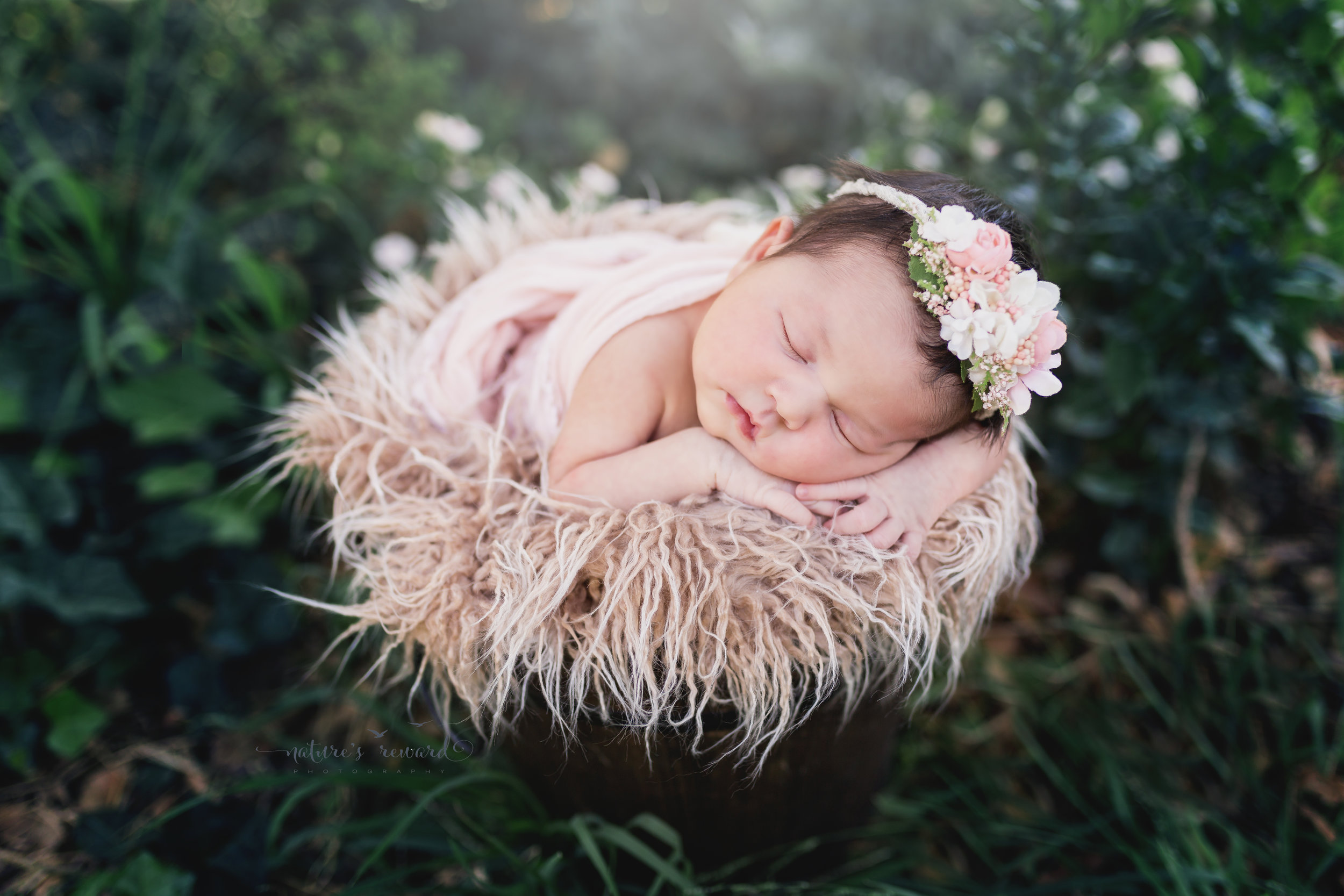 In this portrait this lovely newborn baby girl is wrapped in pink wearing a flower crown in a bucket of furs surrounded by ivy by Southern California Newborn and Family Photographer Nature's Reward Photography