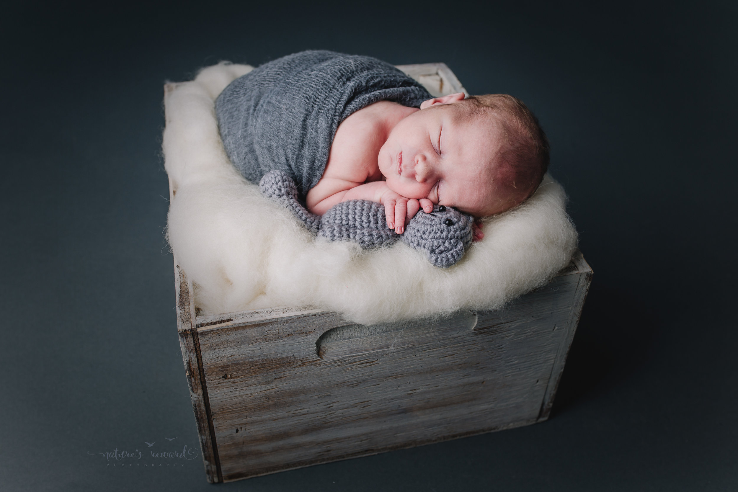 Such a handsome man holding this delightful teddy mom brought in while laying in this box full of stuffing! A newborn portrait by Nature's Reward Photography
