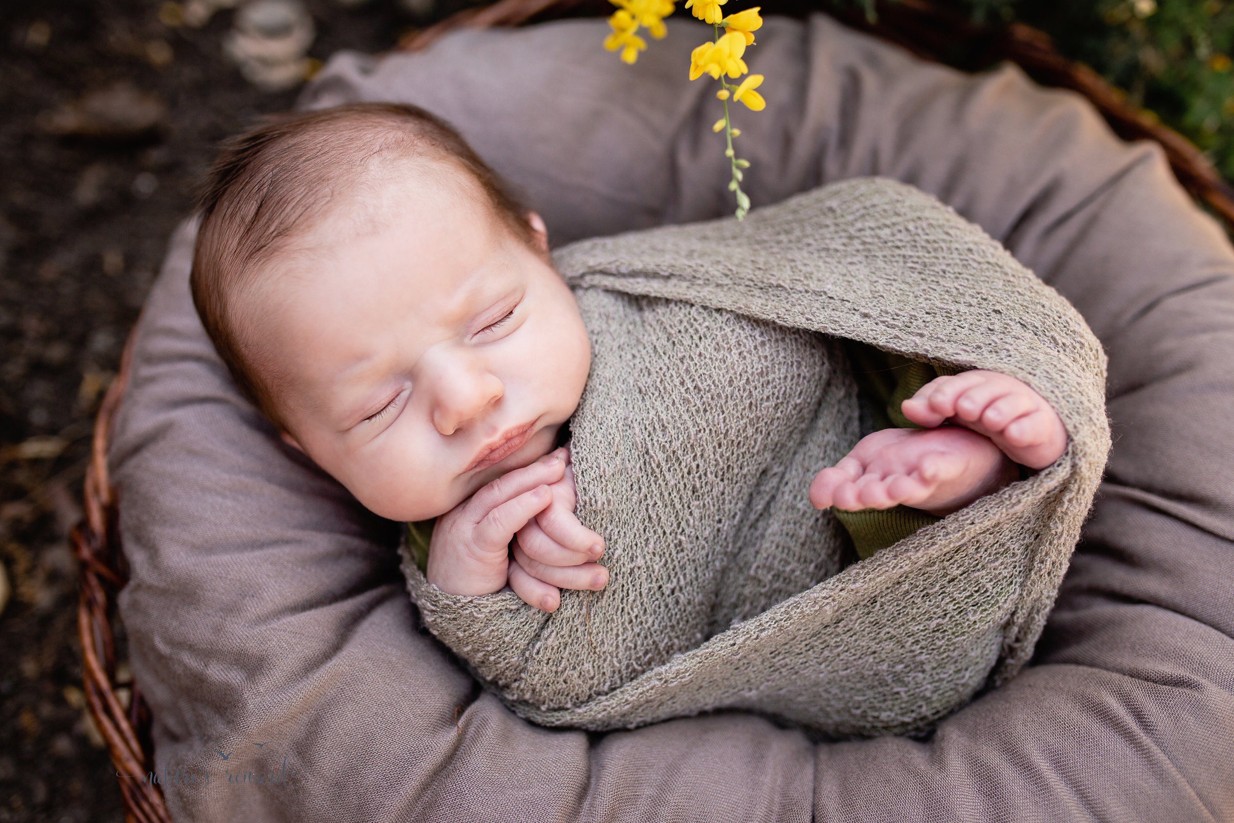 Gorgeous Lighting on this baby boy in the garden photography session while he lays peacefully in a basket featuring soft greens and browns in this portrait by Nature's Reward Photography