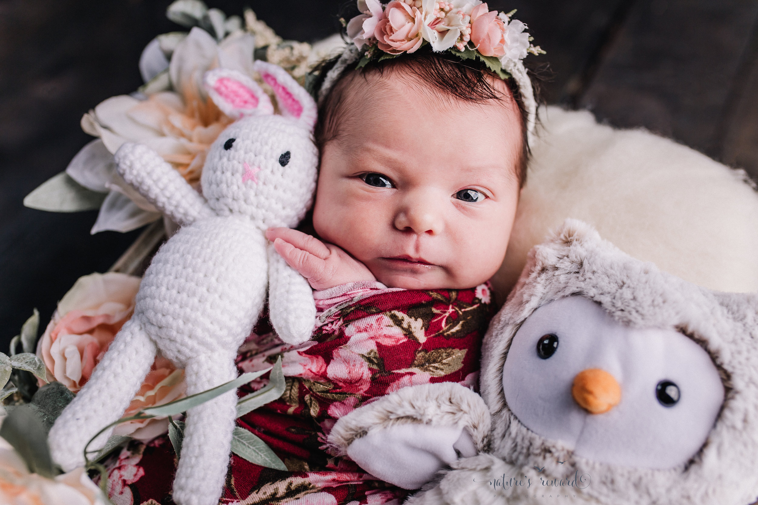 Newborn baby girl wrapped a red floral wrap wearing a flower crown while laying sweetly in a box with flowers and a her stuffed owl while making a stunning connection with the camera in the portrait photography session by Nature's Reward Photography