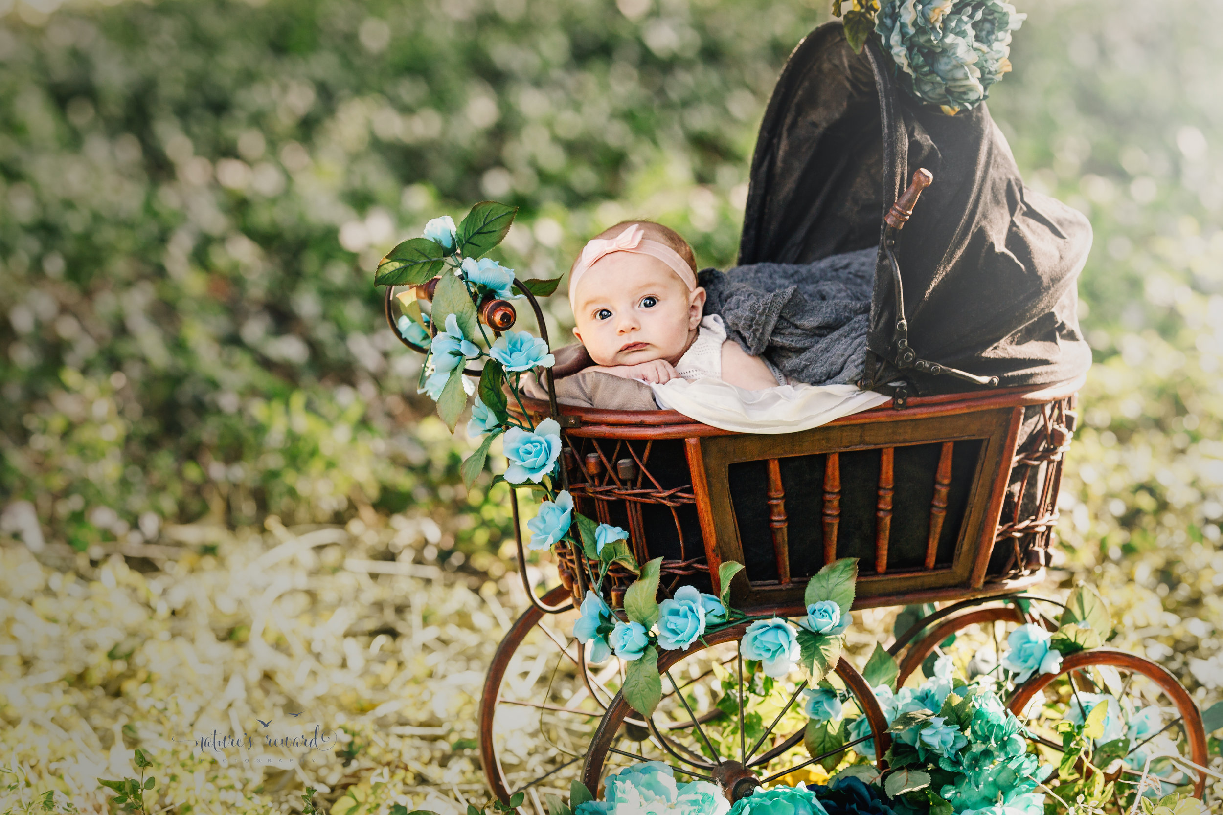 Three (3) month old baby girl in a white dress and pink hair band lays dreamingly in an anitque doll carriage in the beautiful setting sunlight in park setting in this portrait by Nature's Reward Photography.