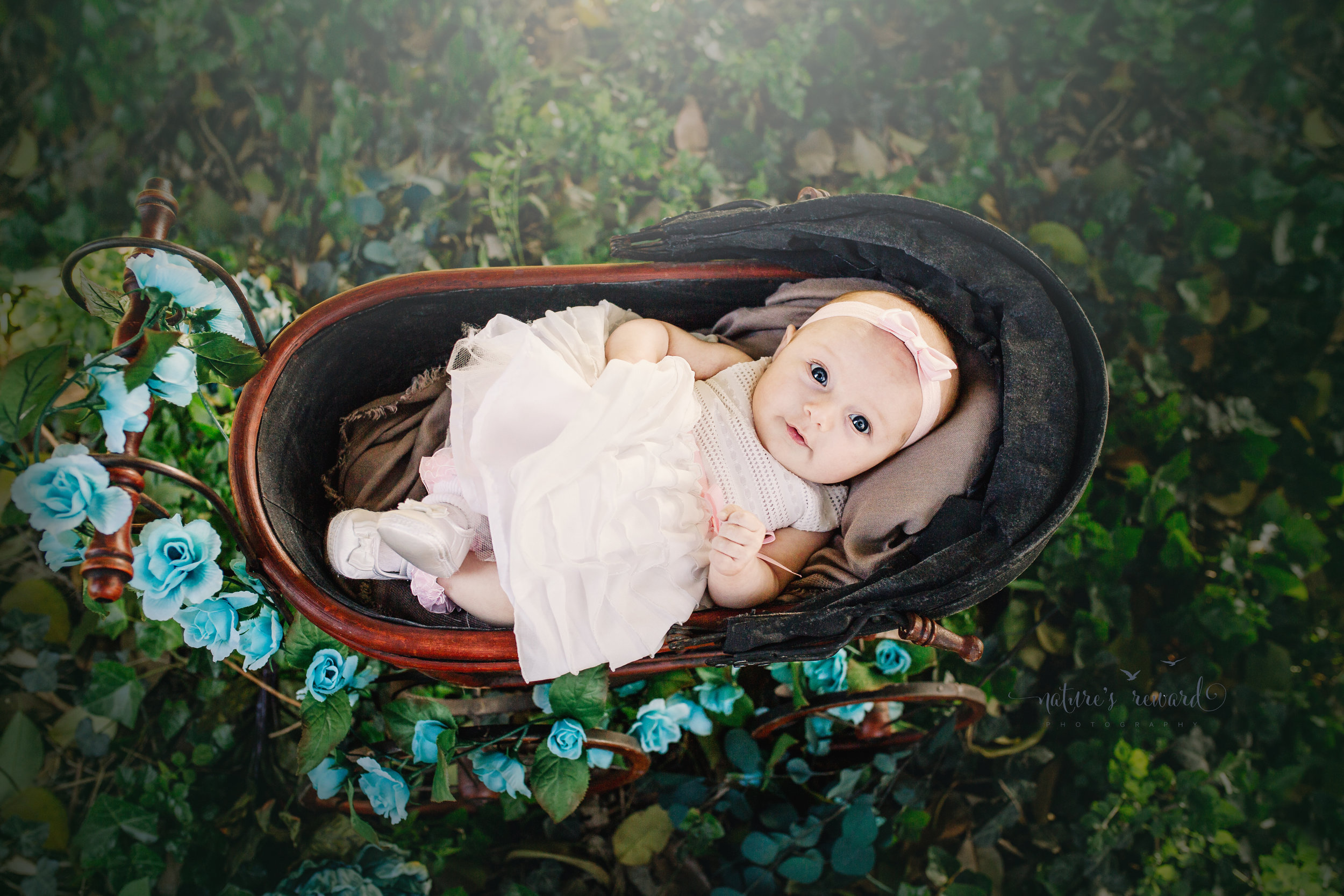 Three (3) month old baby girl in a white dress and pink hair band lays dreamingly in an antique doll carriage in the beautiful setting sunlight in park setting in this portrait by Nature's Reward Photography.