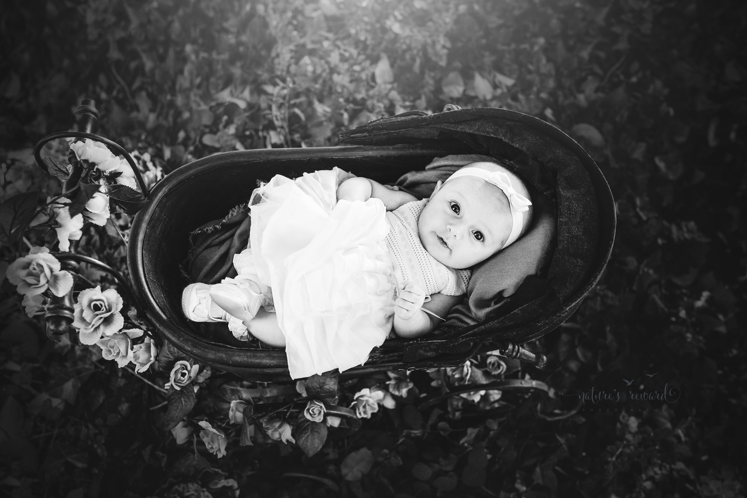 Three (3) month old baby girl in a white dress and pink hair band lays dreamingly in an antique doll carriage in the beautiful in park setting in this black and white portrait by Nature's Reward Photography.