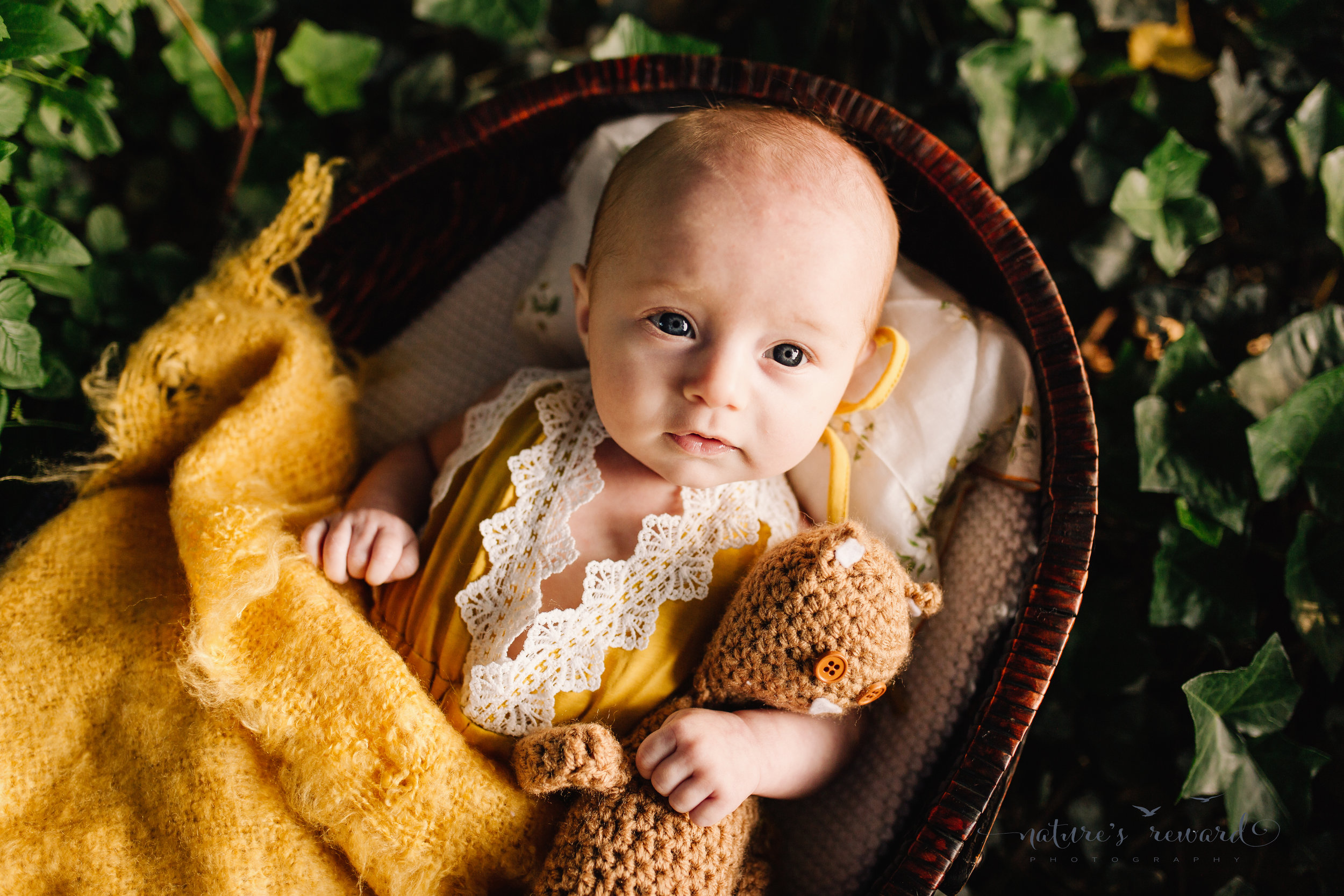 Three (3) month old baby in a yellow romper lined with white lace in a basket with a soft yellow blanket while holding a brown teddy in a basket with a lace lined pillow in a bed of Ivey in sun set light by Nature's Reward Photography.
