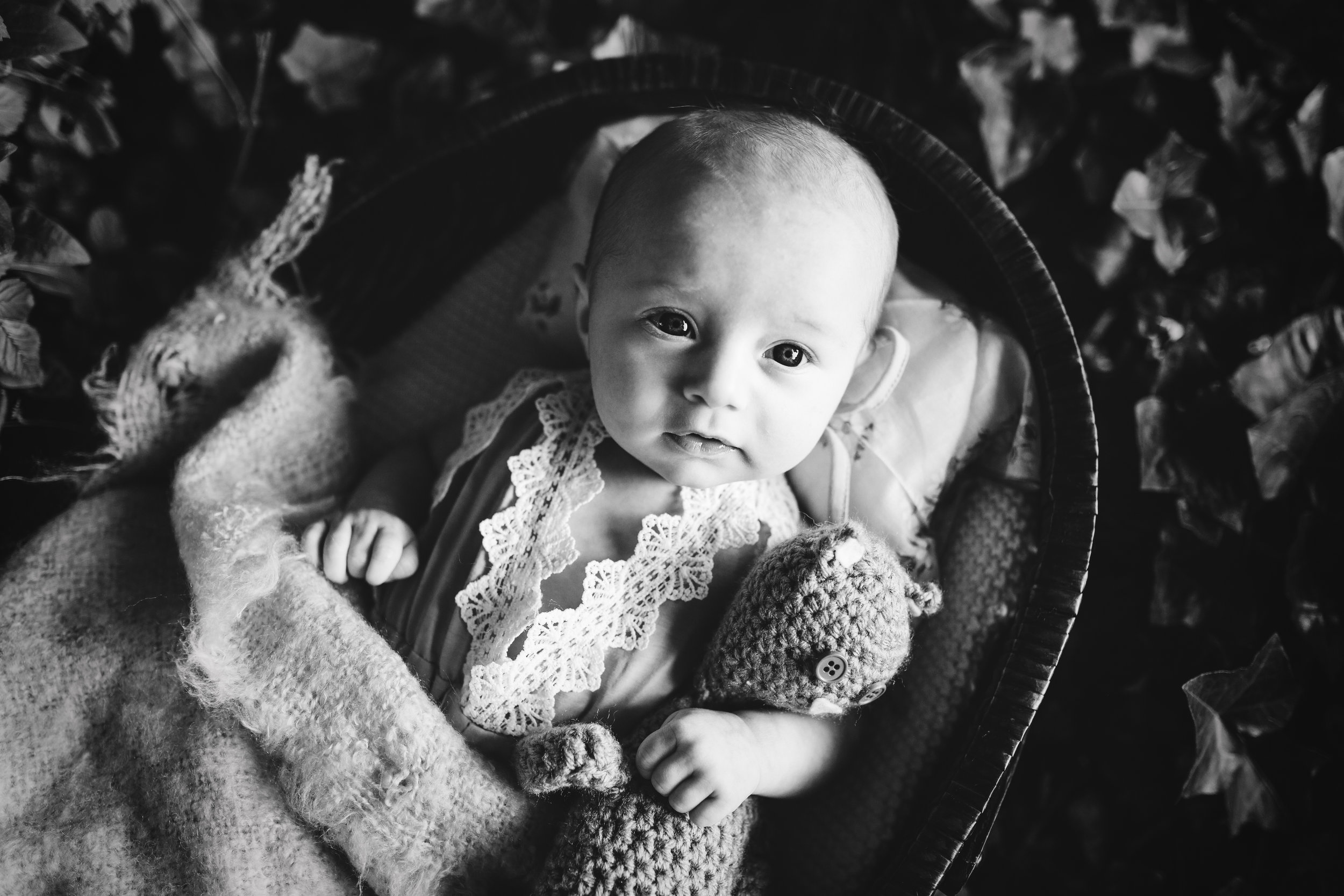 Three (3) month old baby in a yellow romper lined with white lace in a basket with a soft yellow blanket while holding a brown teddy in a basket with a lace lined pillow in a bed of Ivy in sun set lighting this black and white portrait by Nature's Reward Photography.