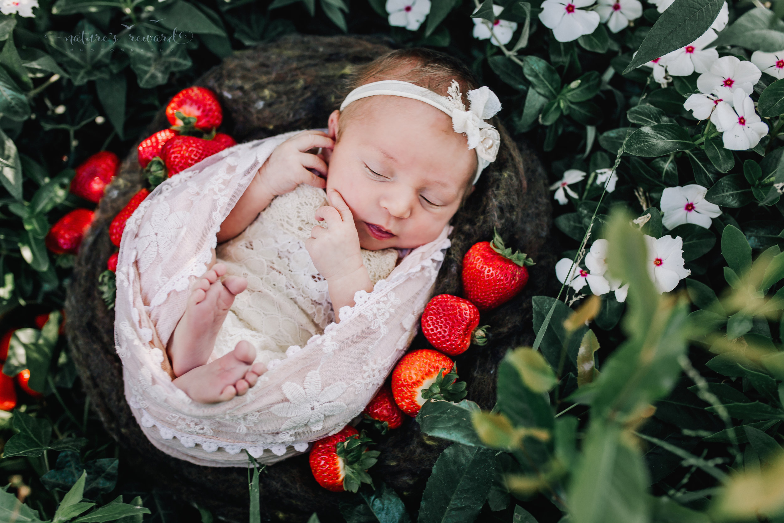 Newborn Baby Girl in a lace romper swaddled in pink lace in a garden with white flowers and red strawberries. A Portrait By Nature's Reward Photography, a San Bernardino Family, Child, and Newborn Baby Photographer.