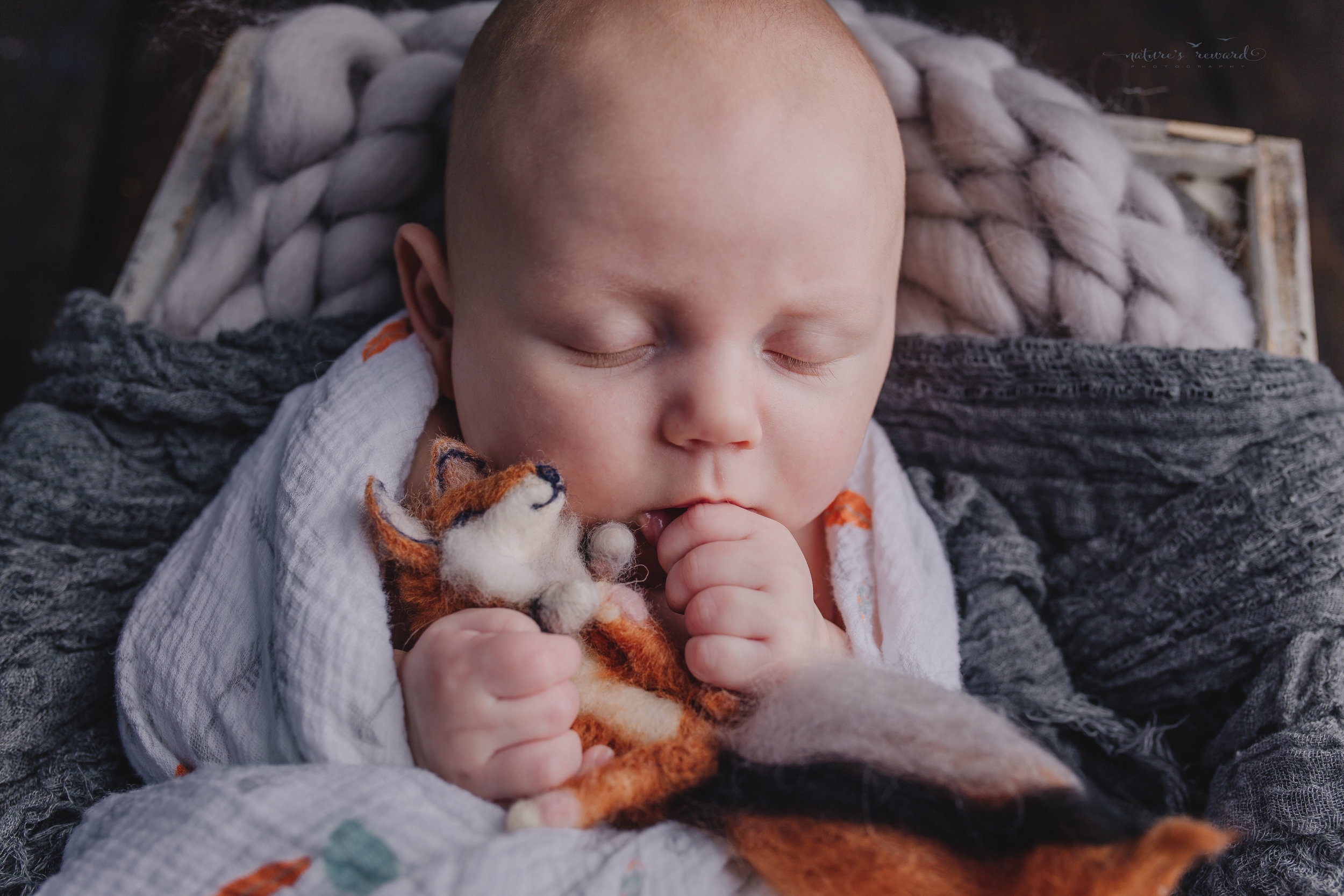 Two month old baby boy newborn baby boy session in a box on a wood floor wrapped In his swaddling blanket from home sucking his thumb and holding baby fox stuffed animal- a portrait by Nature's Reward Photography