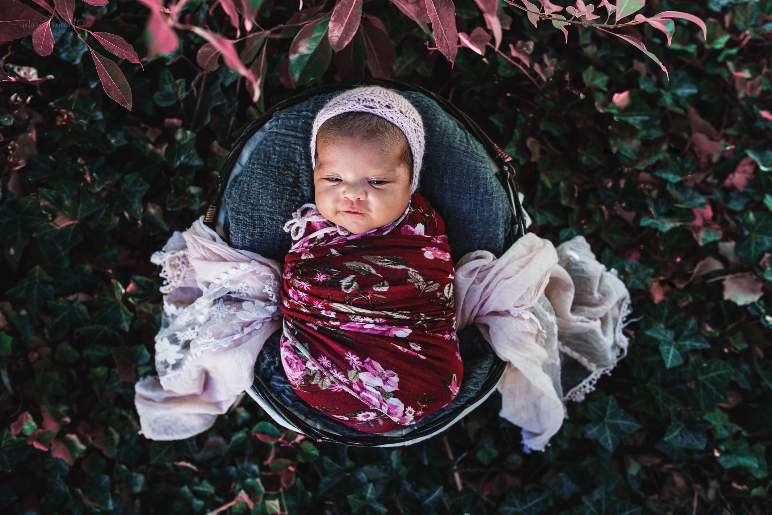 Newborn baby girl in a red floral wrap and pink bonnet in the garden- a portrait by Nature's Reward Photography