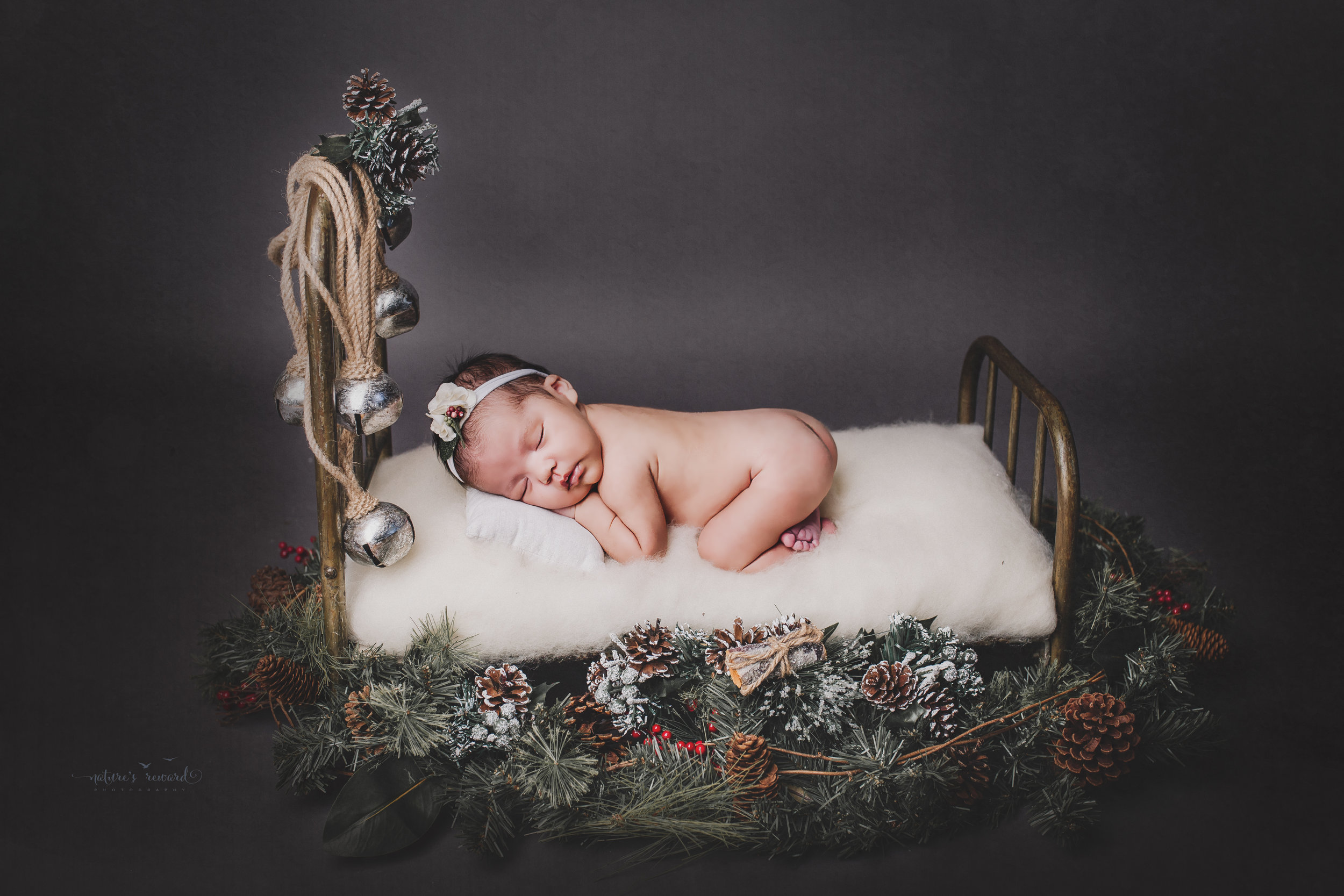 A newborn Christmas portrait of this sweet newborn baby girl on a baby baby surrounded by pine and silver bells- a portrait by Nature's Reward Photography