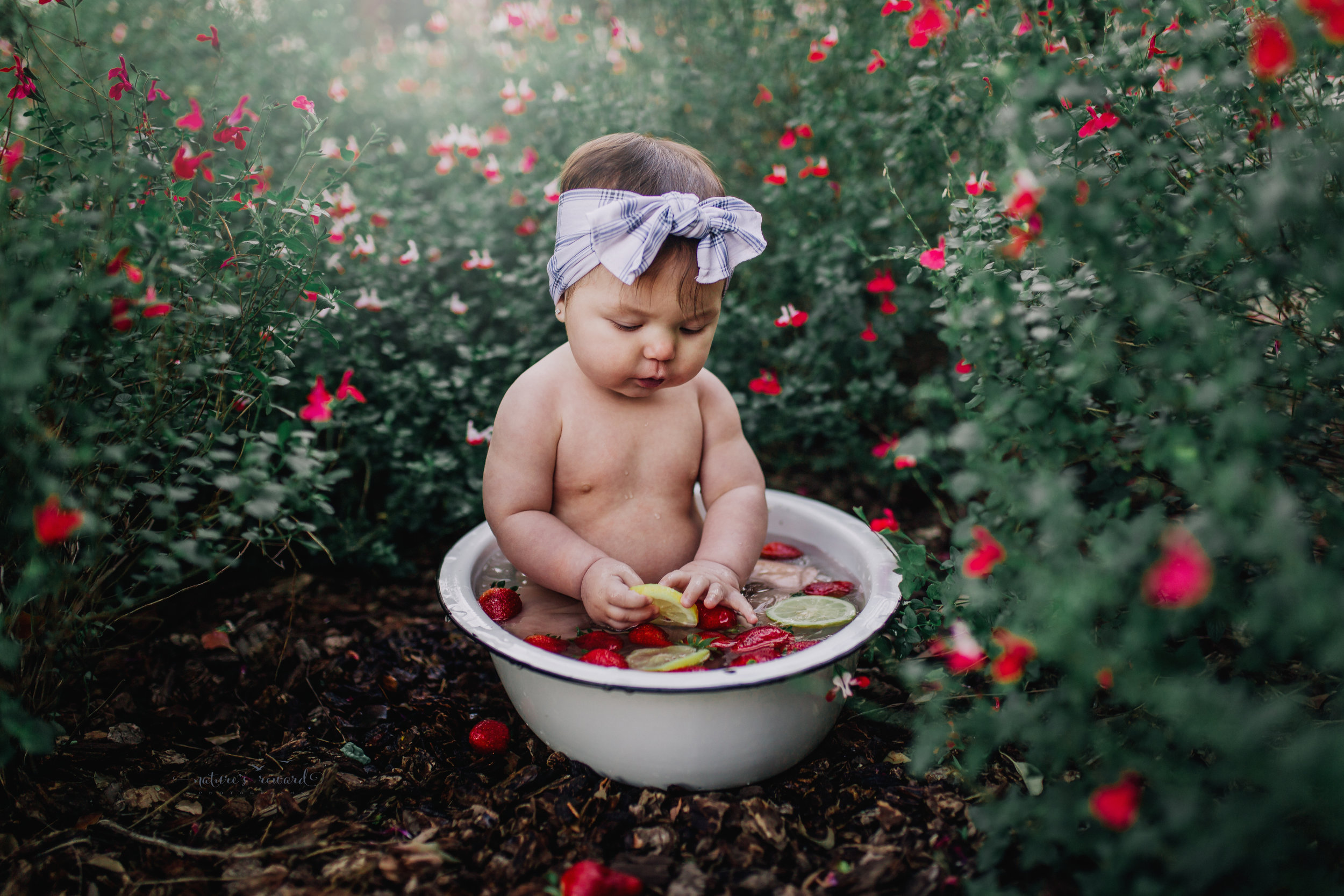 6 month old little girl during her sitter session taking a fruit bath of strawberries and lemons in garden of kissy lips flowers- a portrait by Nature's Reward Photography