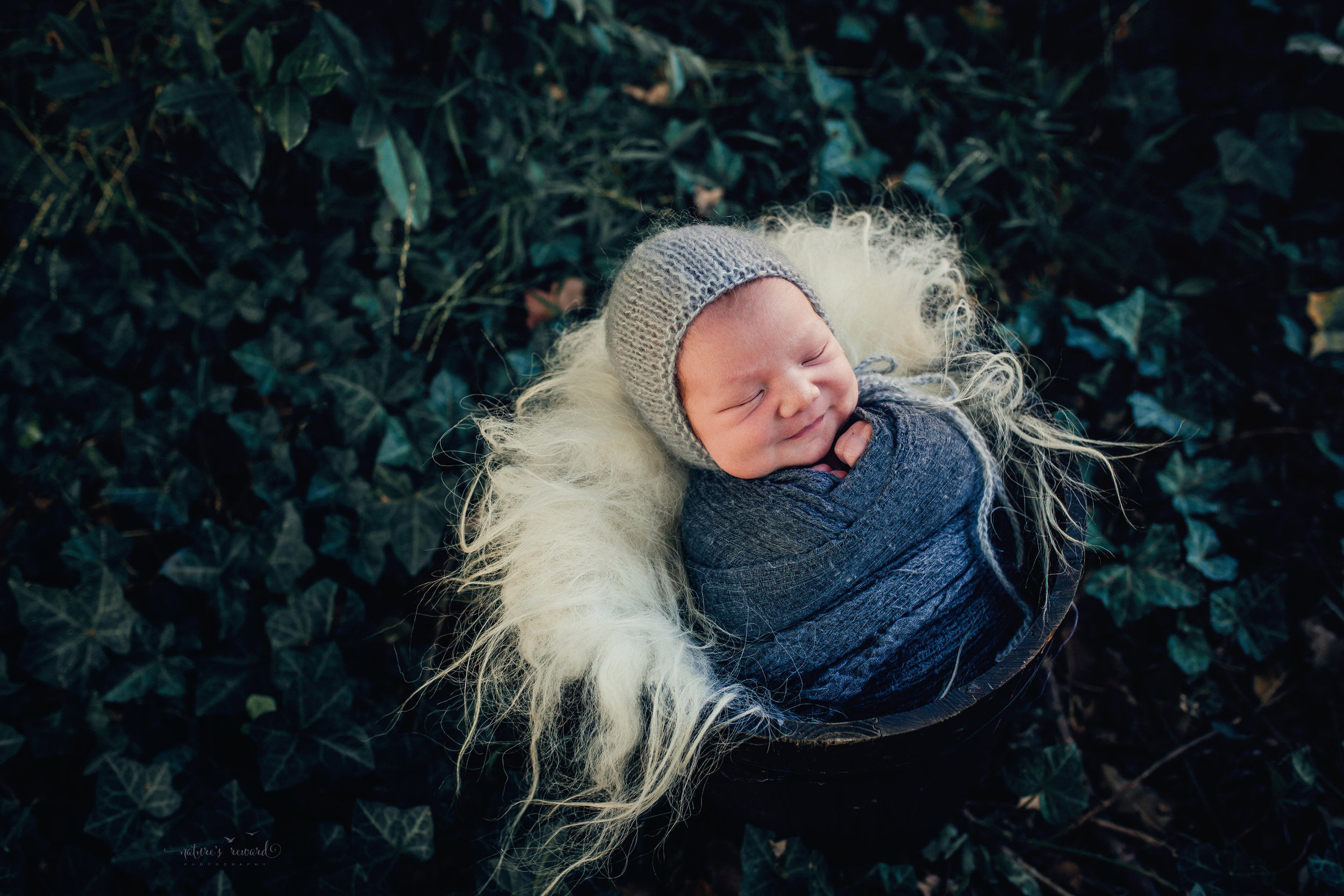 Newborn baby boy swaddled in grey wearing a grey bonnet in a garden of ivy- a portrait by Nature's Reward Photography