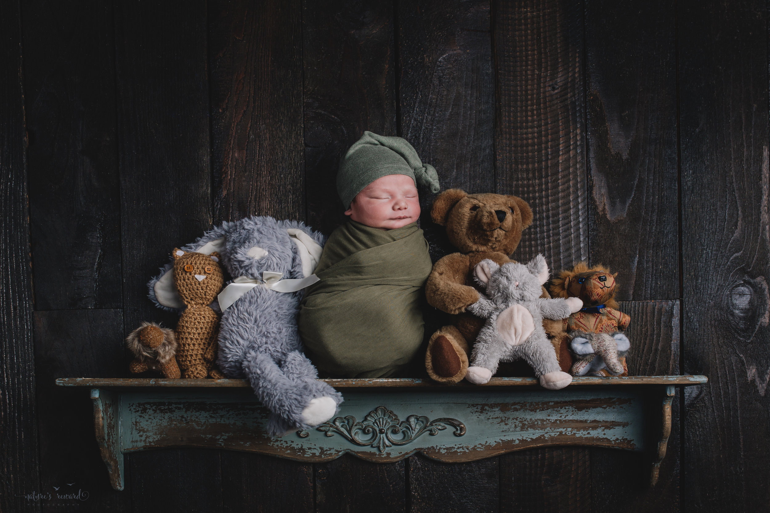 A newborn baby boy on a shelf with stuffed animals keeping him company- a portrait by Nature's Reward Photography