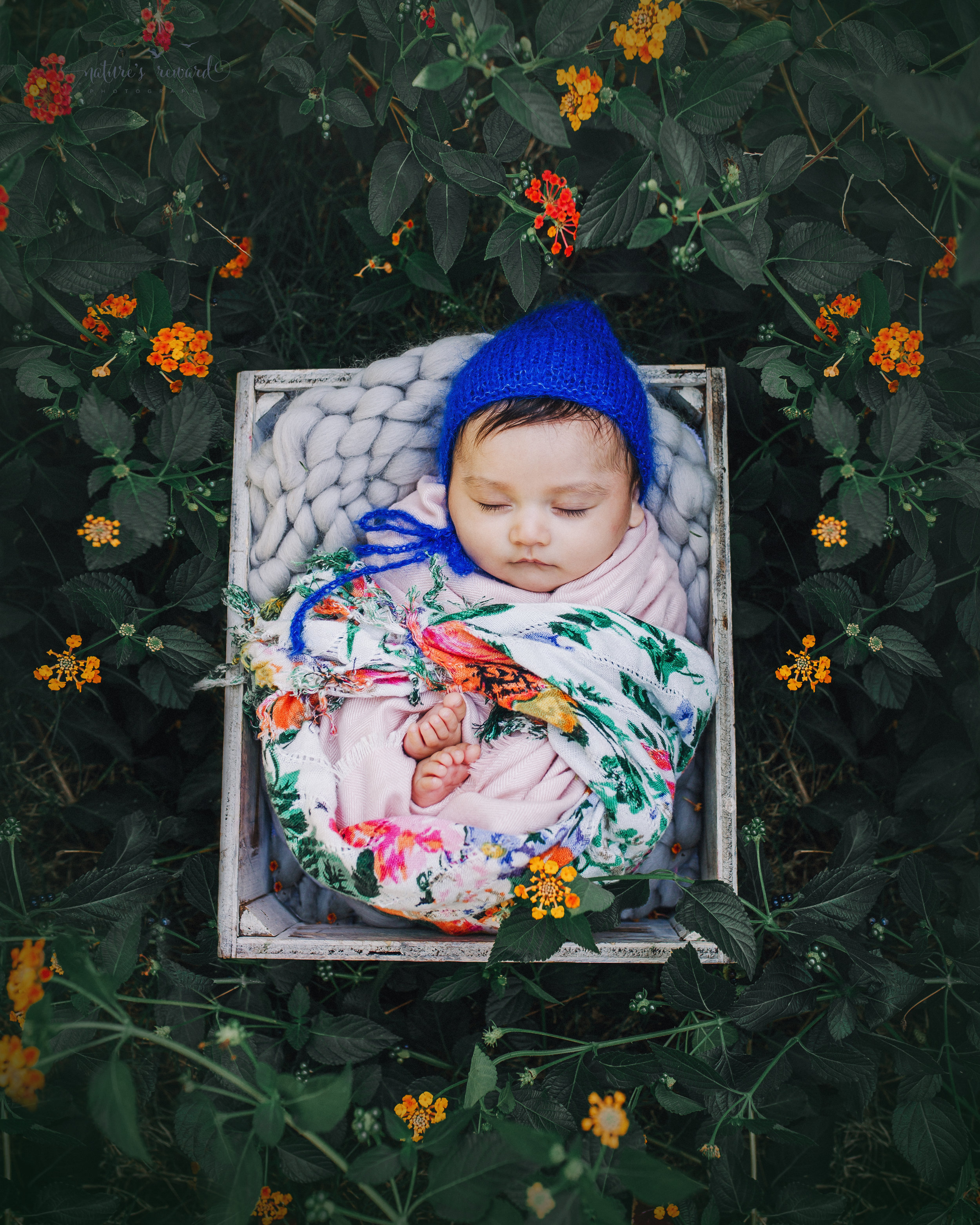 Lovely 10 week old newborn baby girl swaddled in pink, with a pop of color and a blue bonnet- a portrait by Nature's Reward Photography
