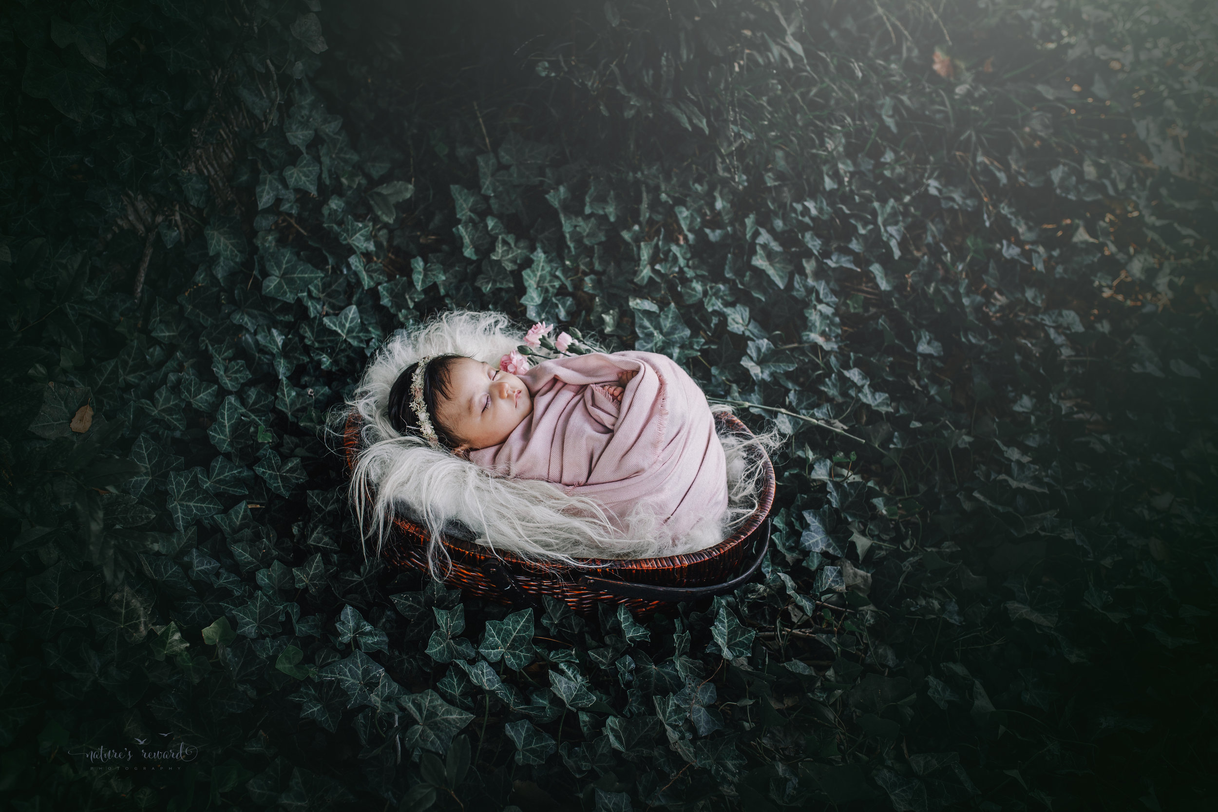 Lovely 10 week old newborn baby girl swaddled in pink, in a bed of ivy- a portrait by Nature's Reward Photography