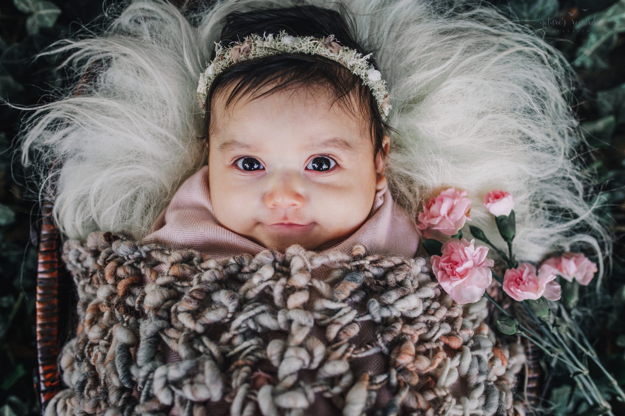 Lovely 10 week old newborn baby girl swaddled in pink under a blanket, in a bed of ivy- a portrait by Nature's Reward Photography