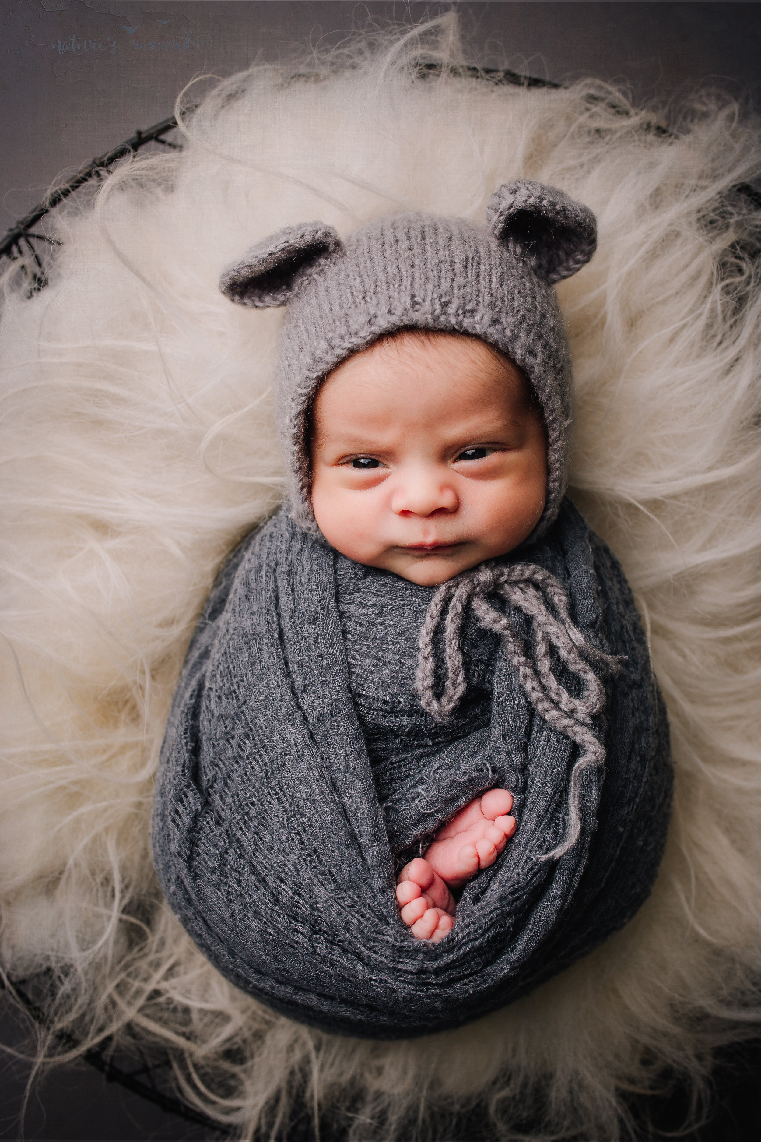 Newborn Baby boy swaddled in grey while laying on a bed of white fur in a metal bowl wearing a teddy bear bonnet - a portrait by Nature's Reward Photography