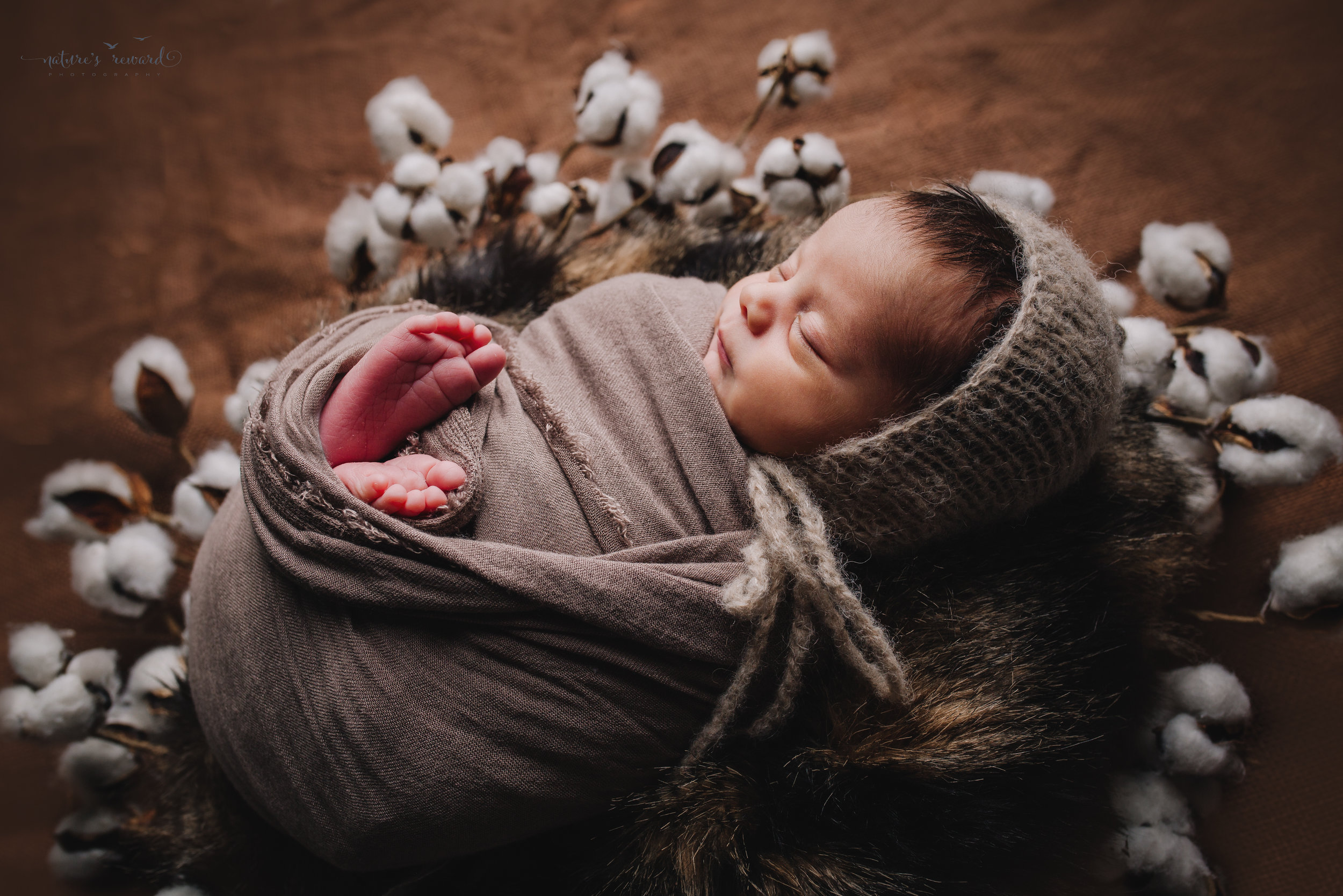 Newborn Baby boy swaddled in tan while laying on a bed of brown and black fur in a cotton blossom wreath wearing a tan bonnet - a portrait by Nature's Reward Photography