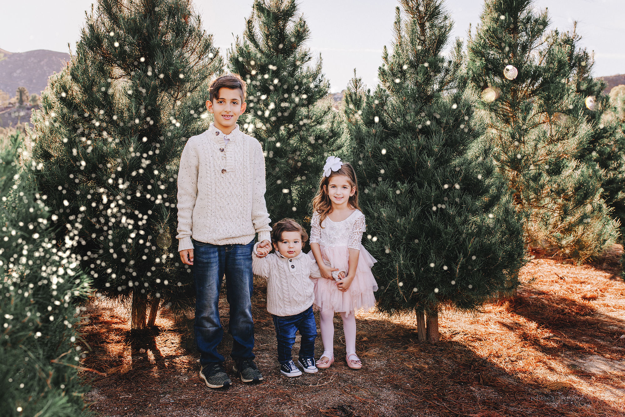 Gorgeous sibling portrait with big brother, Big sister, and Little brother- A Christmas tree farm portrait by Nature's Reward Photography