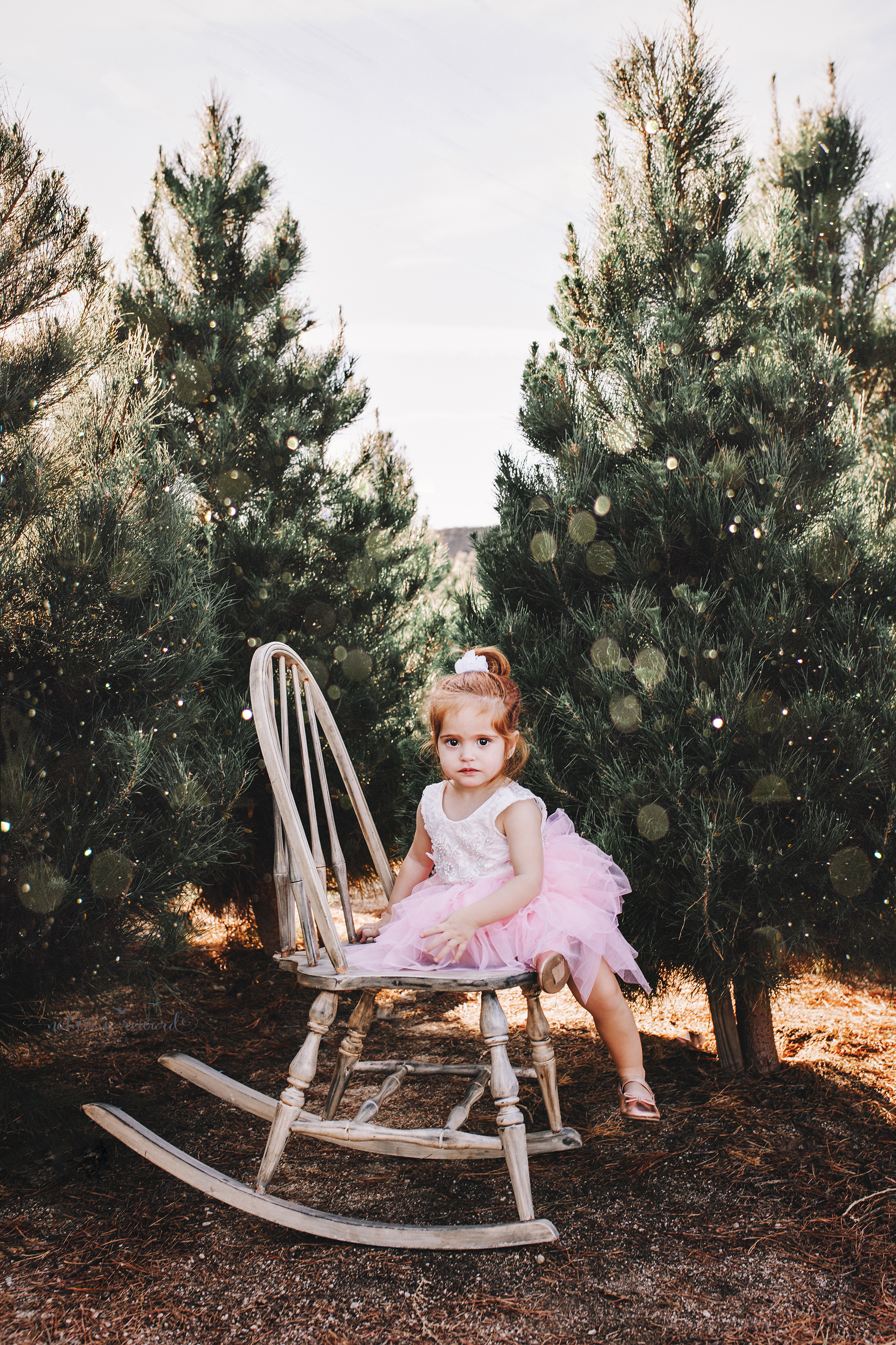Toddler little girl - A Christmas tree farm portrait by Nature's Reward Photography