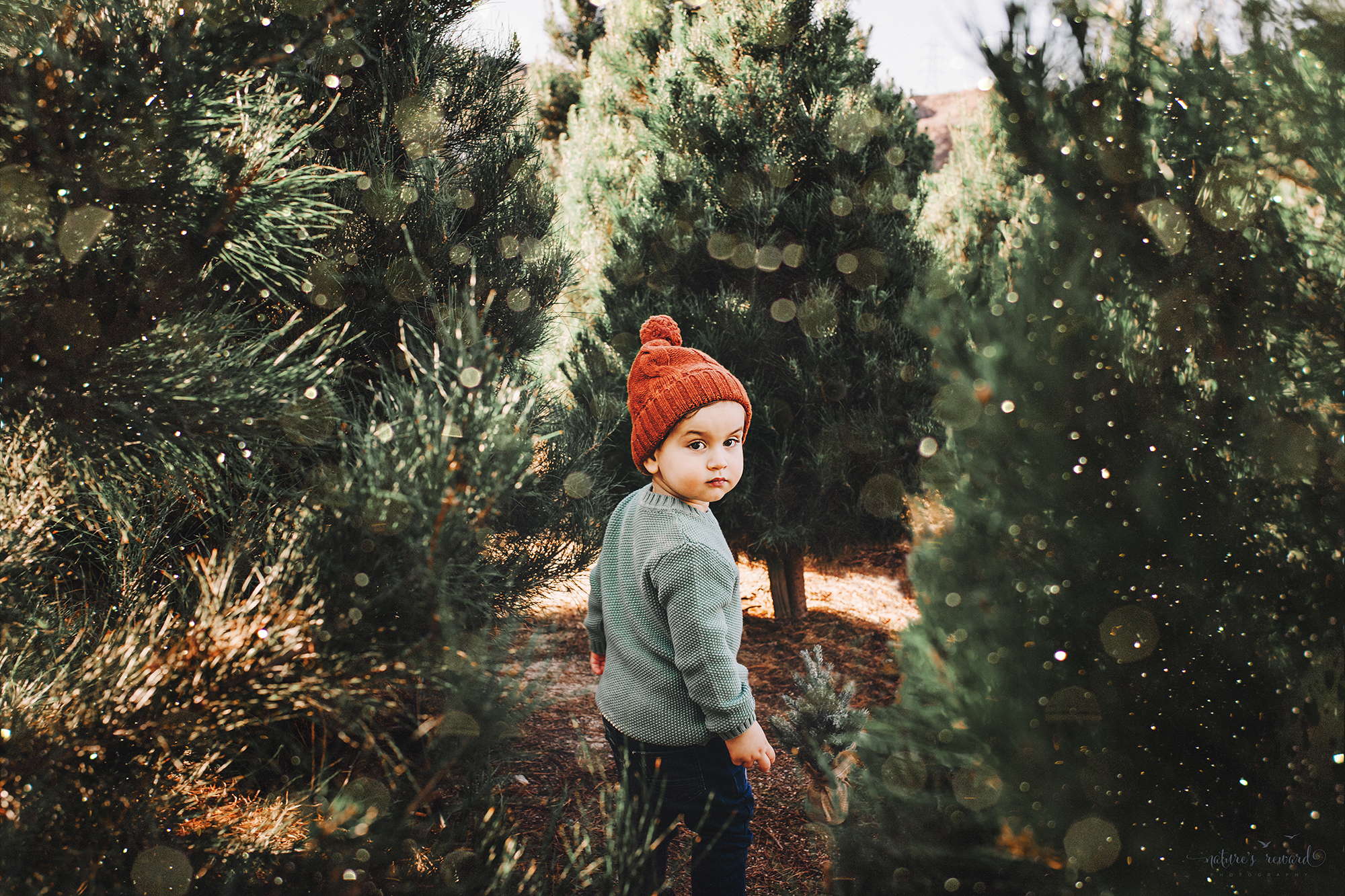 Candid Toddler little boy- A Christmas tree farm portrait by Nature's Reward Photography