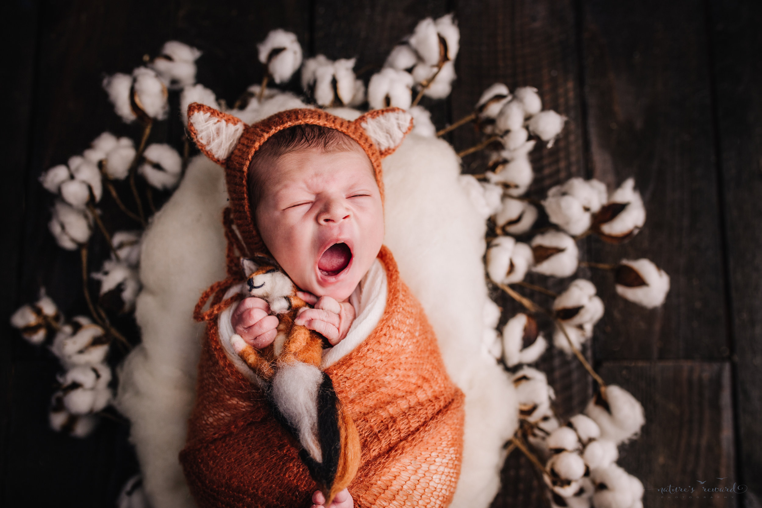 Newborn baby boy swaddled in fox orange with a fox bonnet and fox baby on a cotton wreath on a dark wood floor by san Bernardino's maternity, newborn and family photography, Nature's Reward Photography