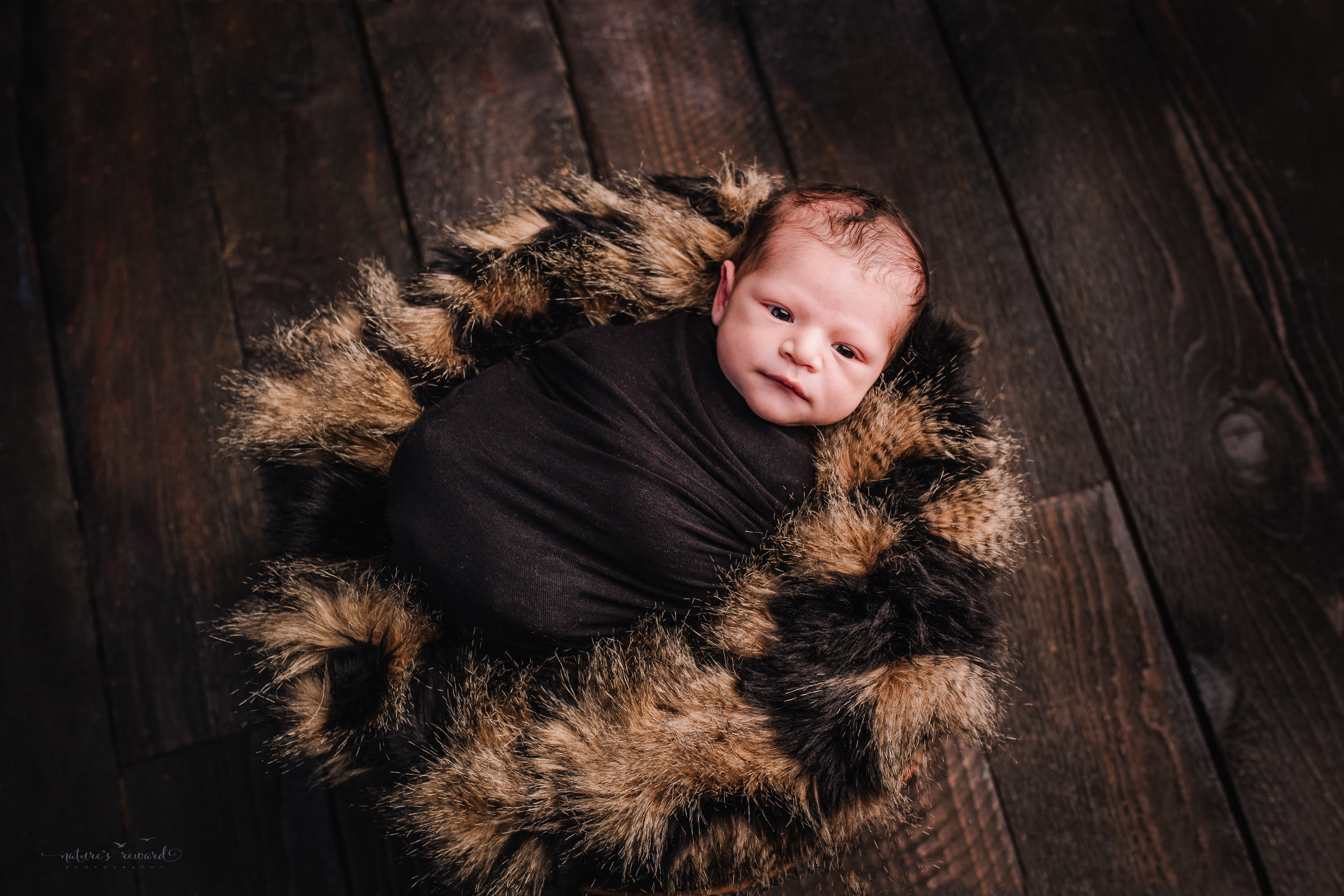 Newborn baby boy swaddled in black on a bed of furs on a dark wood floor by san Bernardino's maternity, newborn and family photography, Nature's Reward Photography