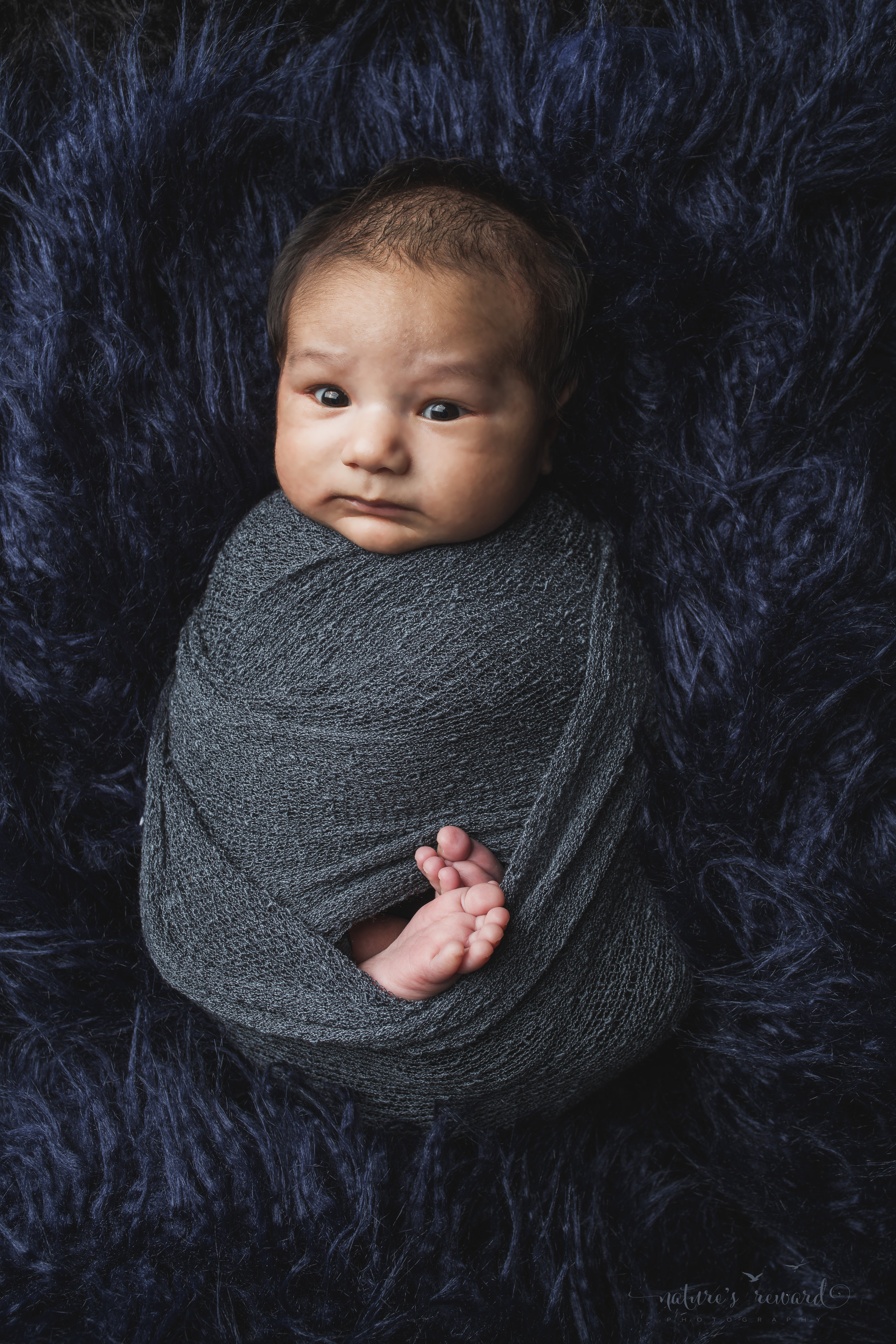 Newborn baby boy swaddled  a portrait by Nature's Reward Photography