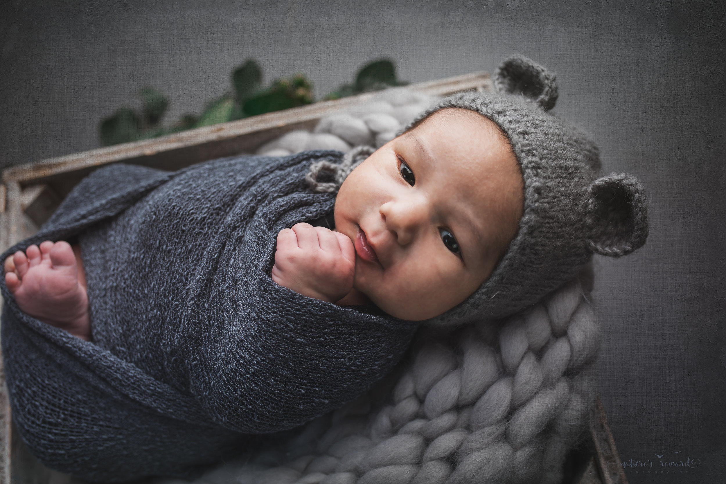 Newborn baby boy swaddled wearing a bear bonnet a portrait by Nature's Reward Photography