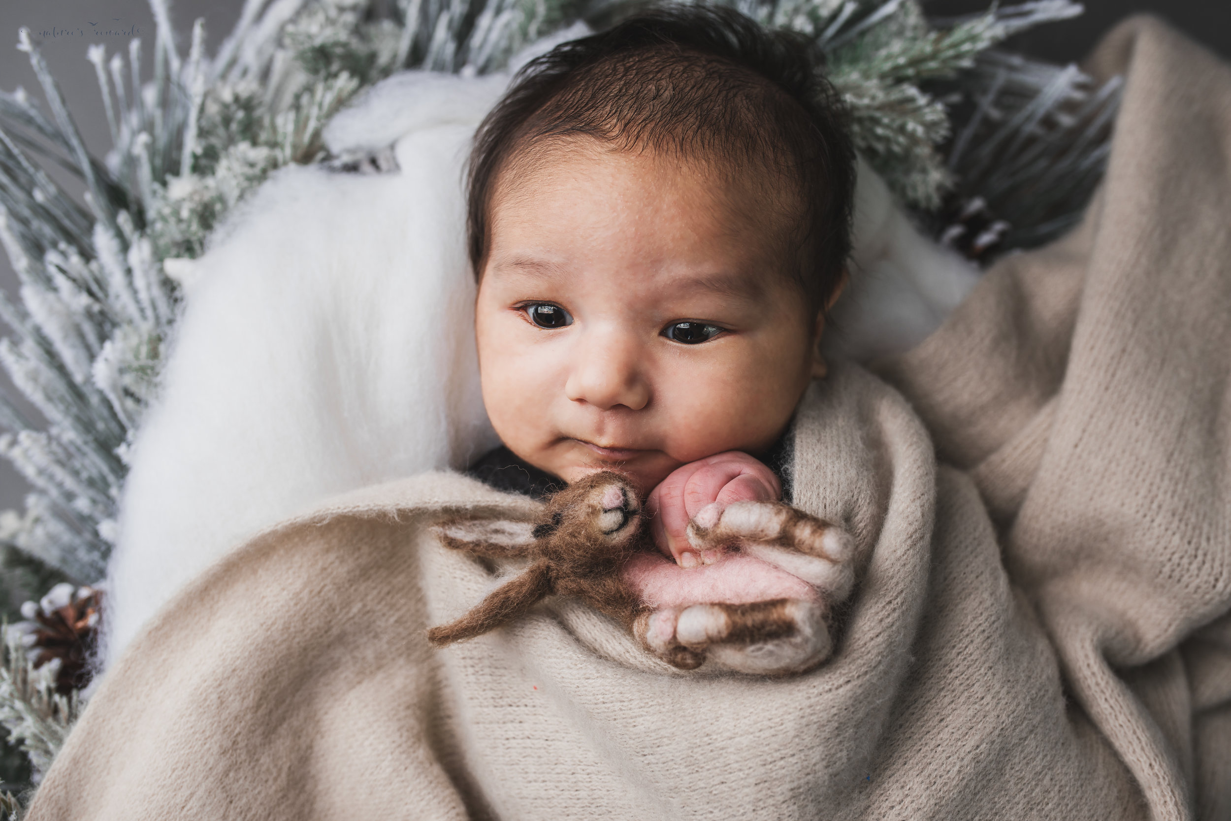Newborn baby boy swaddled in a winter wreath a portrait by Nature's Reward Photography