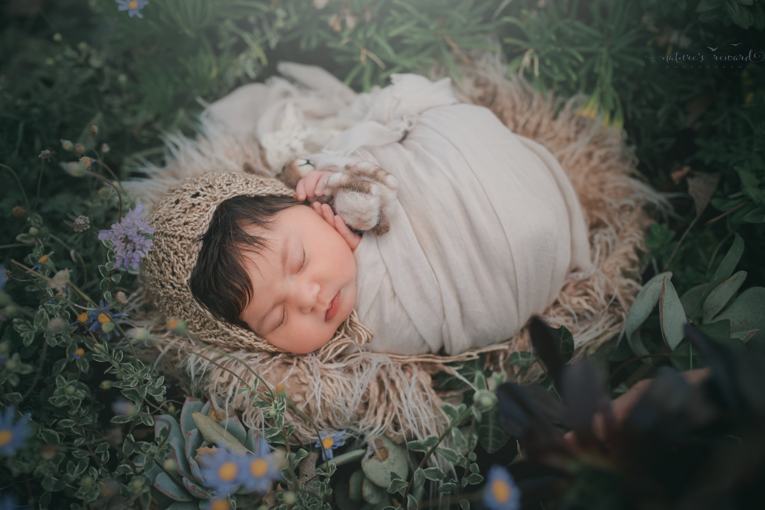 Newborn baby girl in this garden portrait of succulents and flowers, a portrait by Nature's Reward Photography