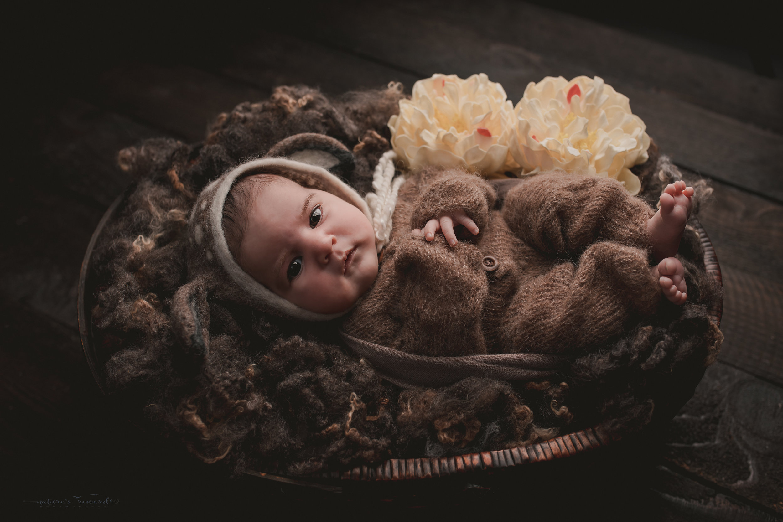 """Newborn """"deer"""" in a bed of fluff wide awake- a portrait by Nature's Reward Photography"""