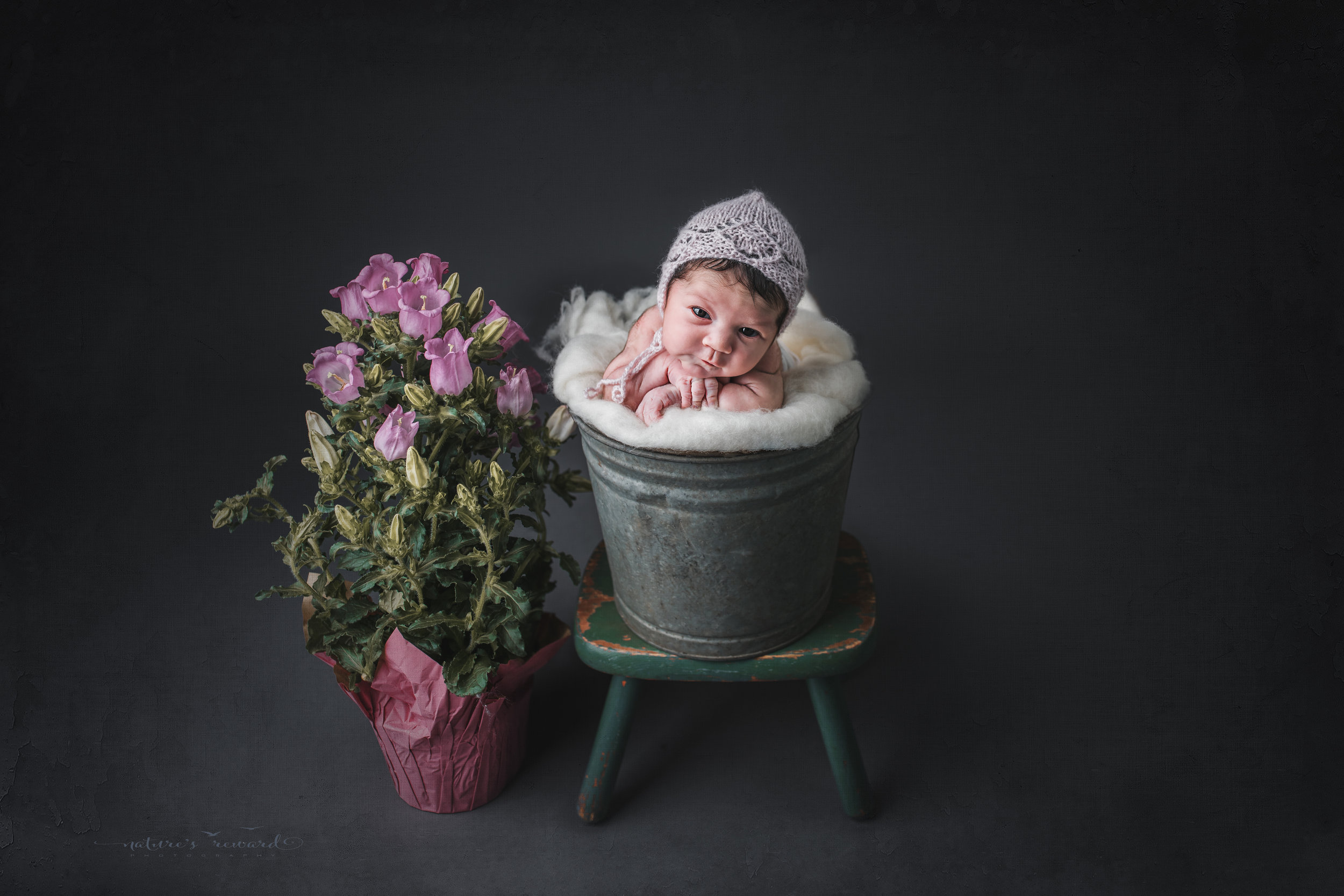 A newborn baby girl wearing a pink bonnet in a bucket next to potted flowers, a portrait by Nature's Reward Photography.