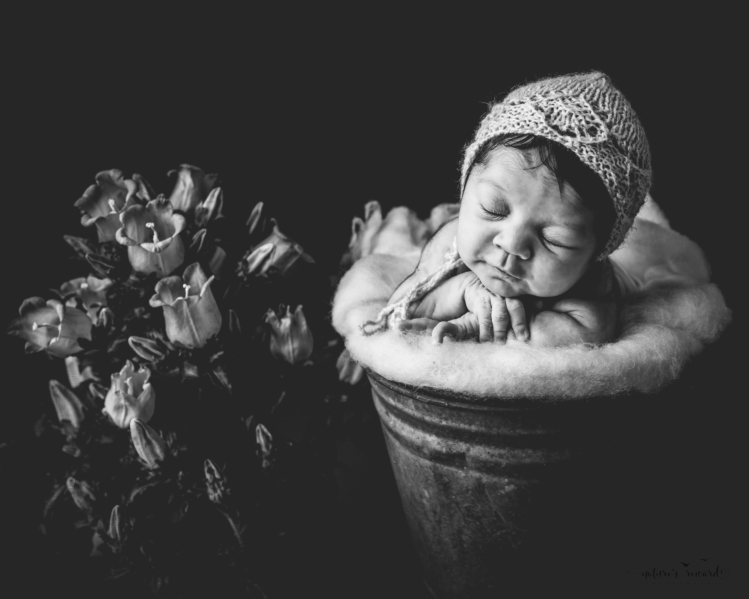 A black white portrait of a newborn baby girl wearing a pink bonnet in a bucket next to potted flowers, a portrait by Nature's Reward Photography.
