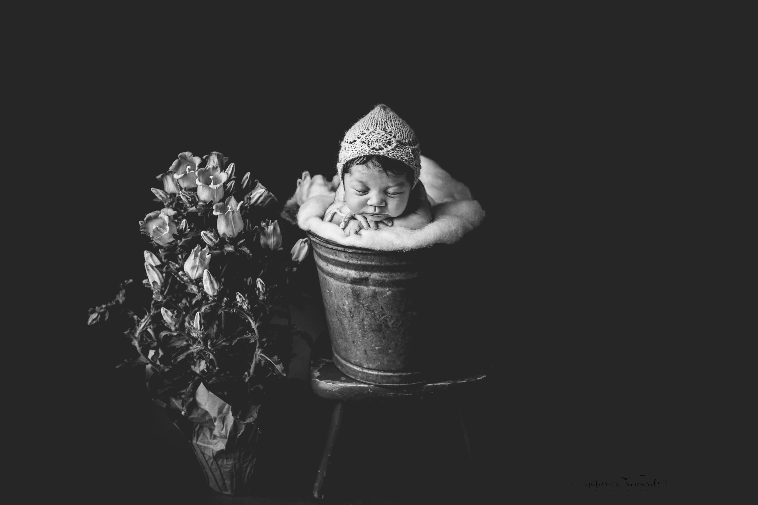 A black and white portrait of newborn baby girl wearing a pink bonnet in a bucket next to potted flowers, a portrait by Nature's Reward Photography.