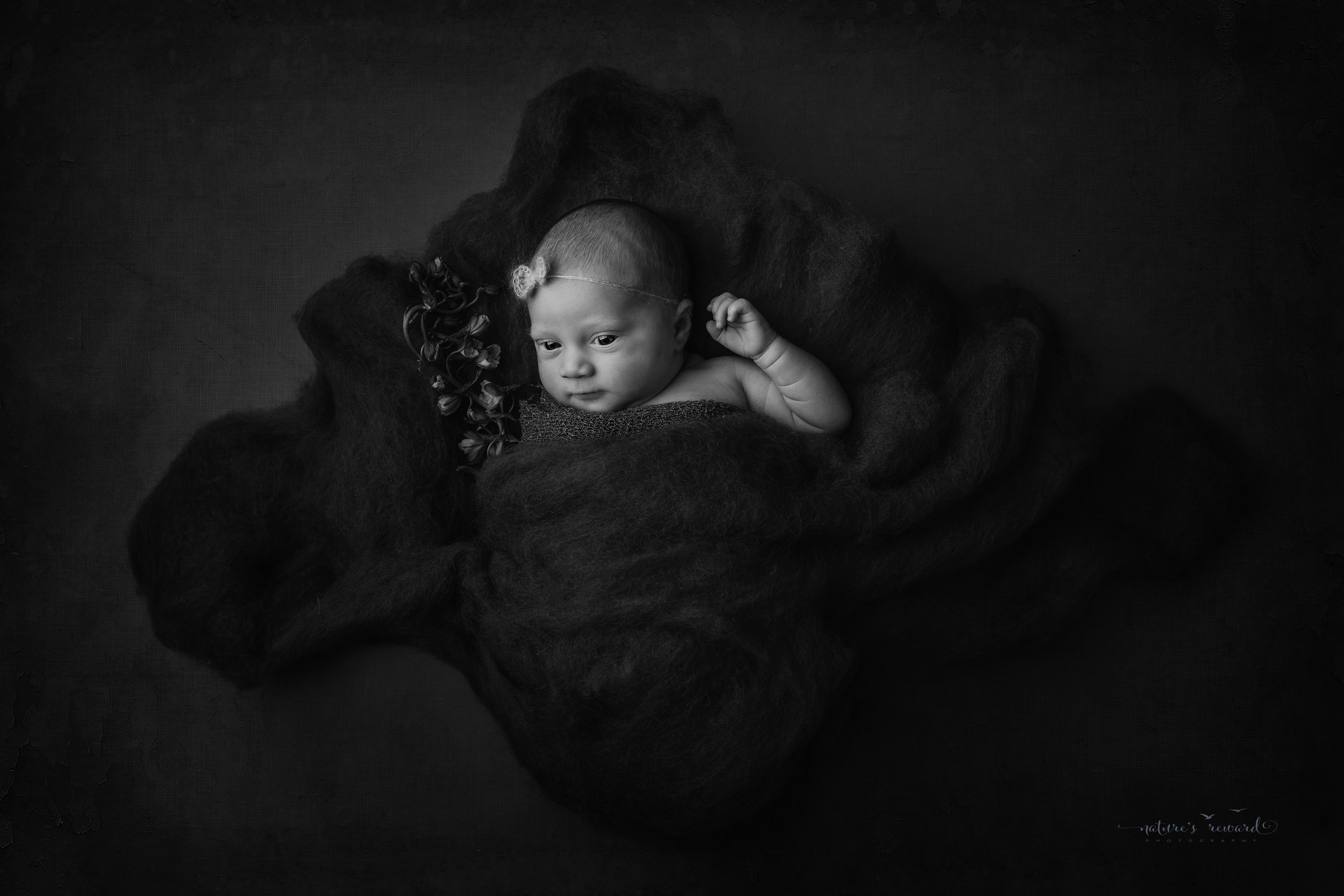 Newborn baby girl in a creative flower with grey and blue tones in this baby portrait by Nature's Reward Photography