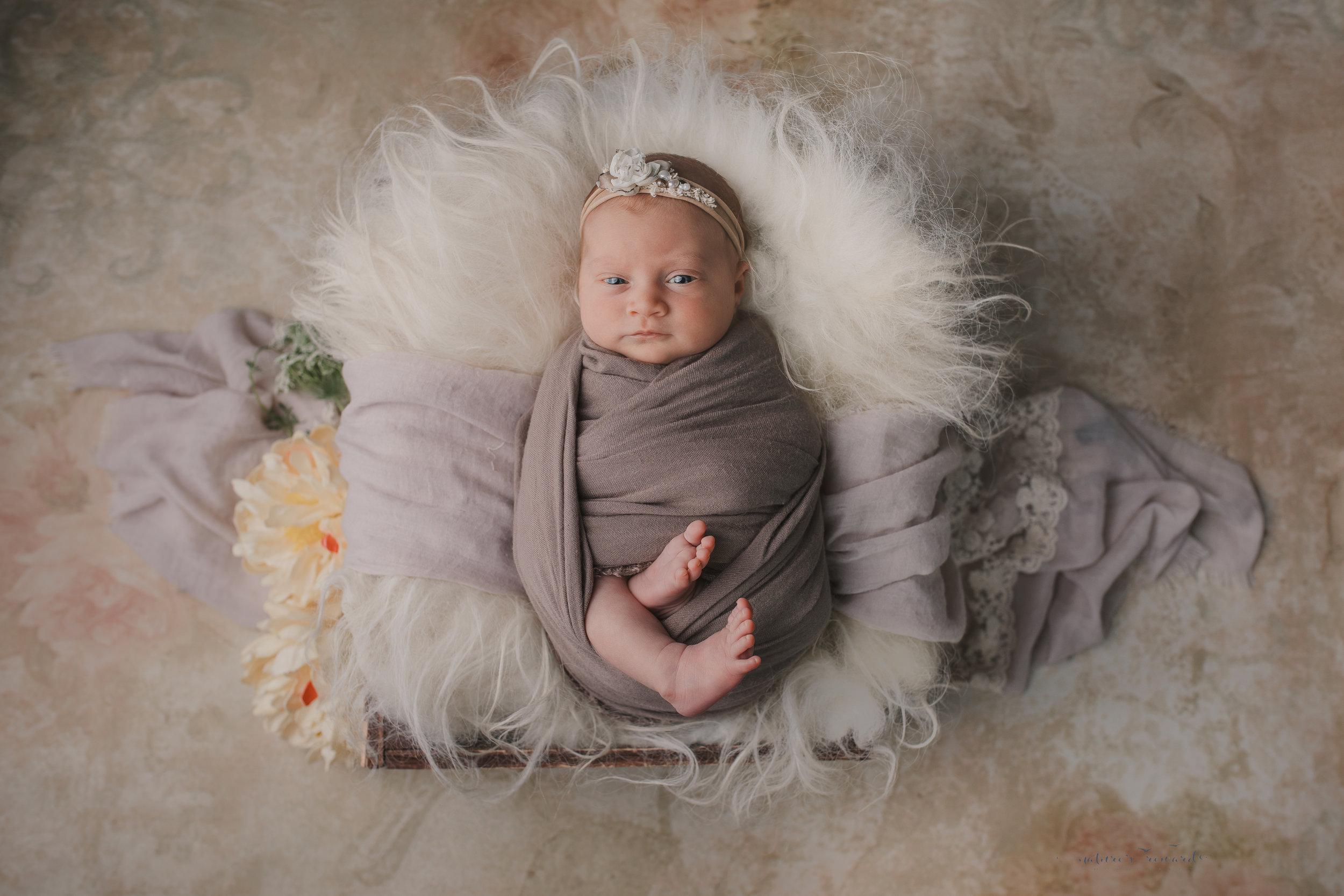 Newborn baby girl on a tan floral backdrop in a box of furs swaddled in tan- a baby portrait by Nature's Reward Photography