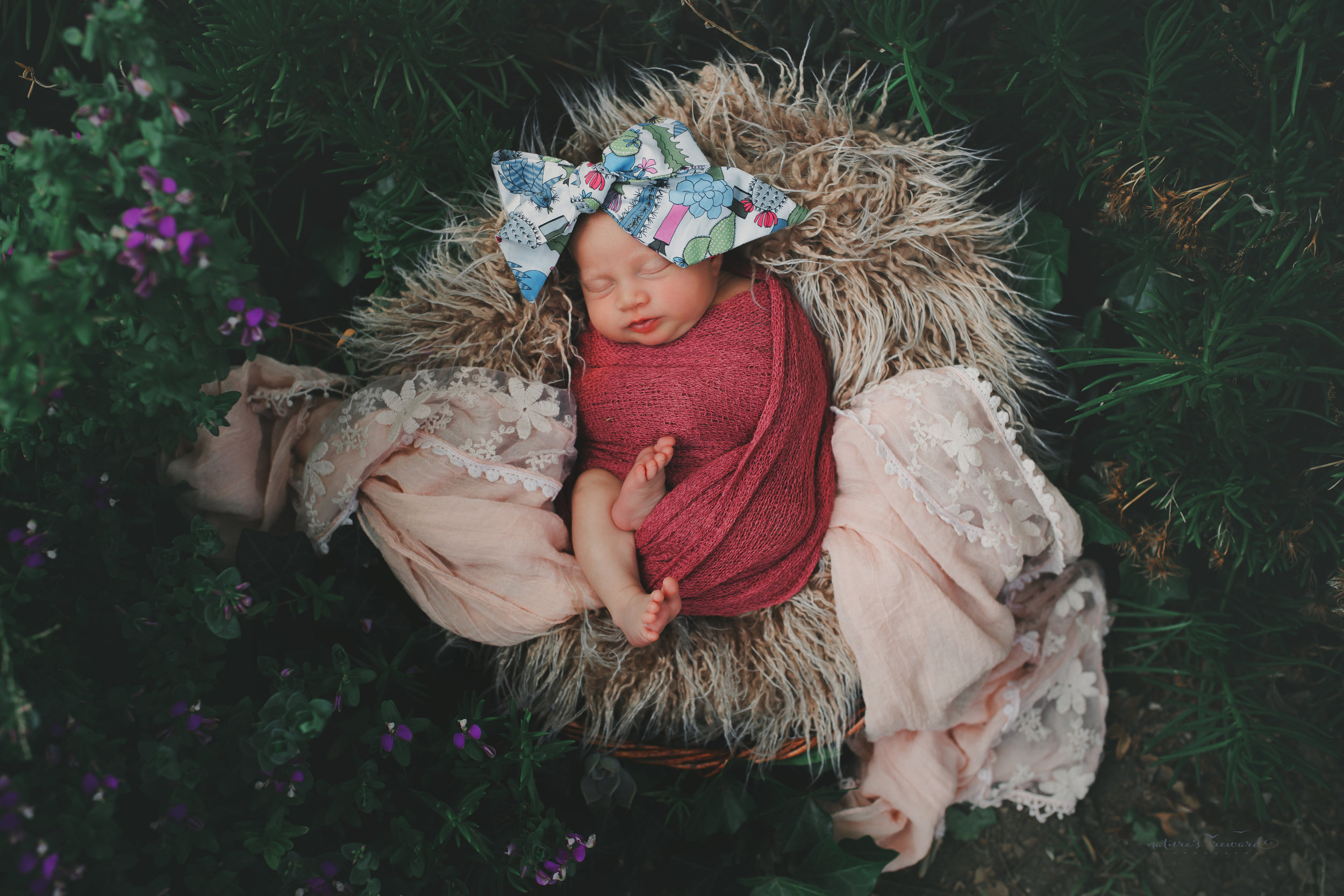 Newborn baby girl in a succulent and flower garden on a bed of fur wearing pinks and blue, a baby portrait by Nature's Reward Photography