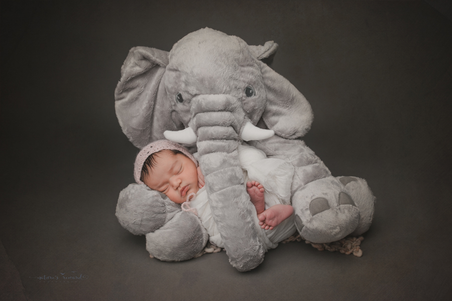 Newborn baby girl swaddled in white being cuddled by an elephant a portrait by nature's Reward Photography