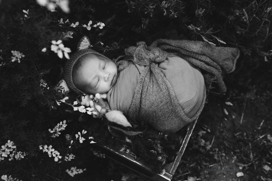 A black and White Portrait of Newborn Baby boy swaddled and in the Garden wearing the cutest fox Bonnet holding a hand felted fox in a portrait by Nature's Reward Photography
