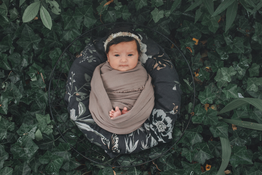 Newborn baby girl in a bed of ivy  newborn portrait by Nature's Reward Photography