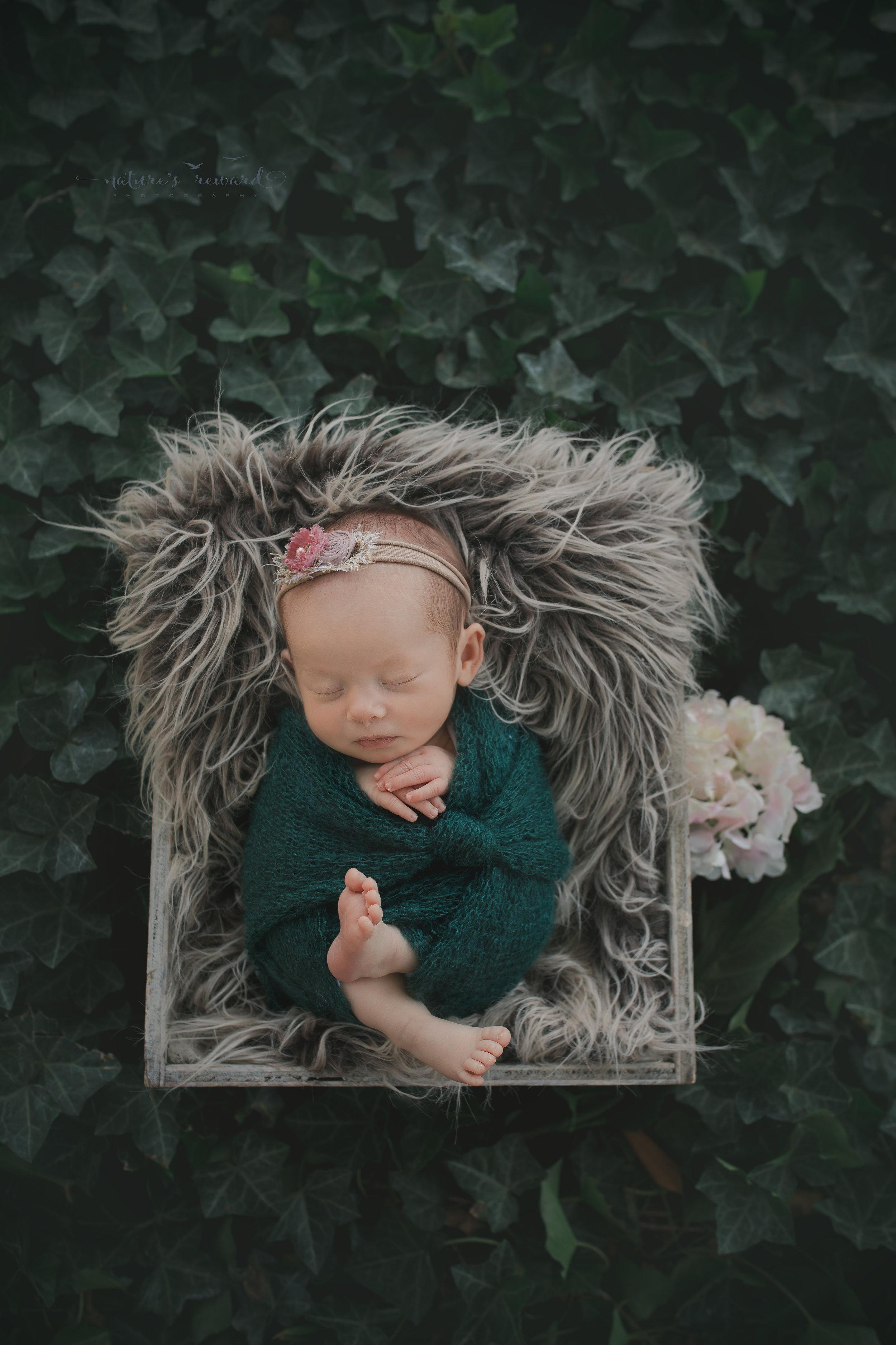 A newborn portrait by Nature's Reward Photography