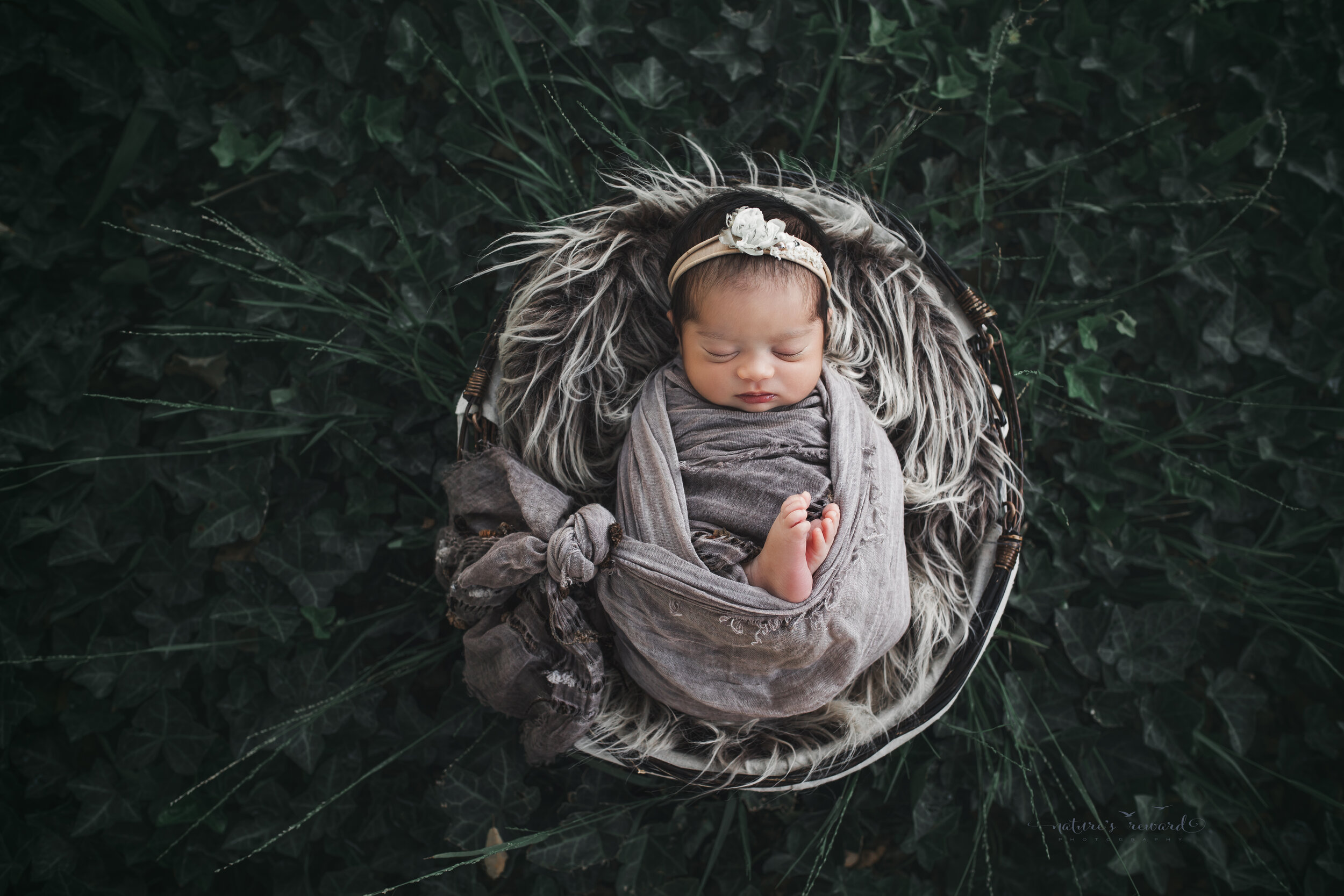 Baby girl in an ivy garden in tans, and steel grey, a newborn portrait by Nature's Reward Photography
