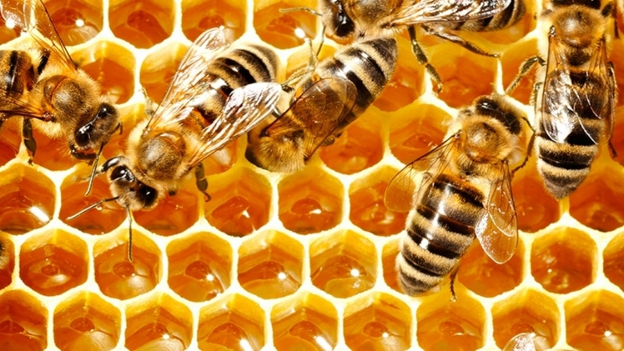 blume Bee Secret #21 - Wing It. Worker bees use their wings to fan the nectar inside their hive to reach a moisture content of 18% –– a process that ripens the nectar into honey.