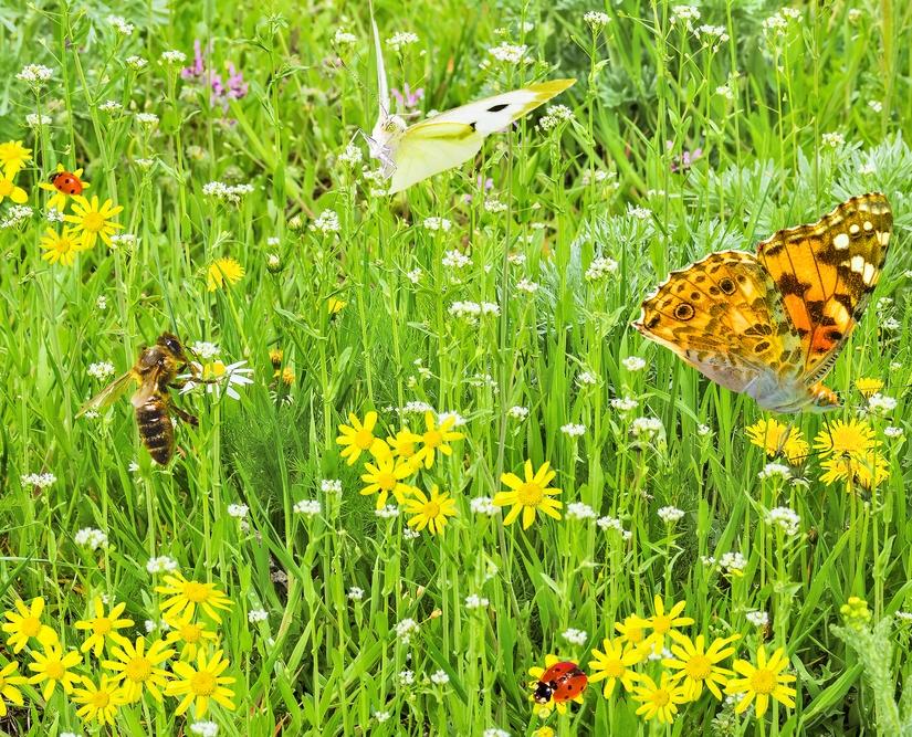 Pollinator Party.jpg