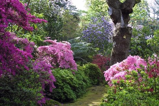 dunster gardens.jpg