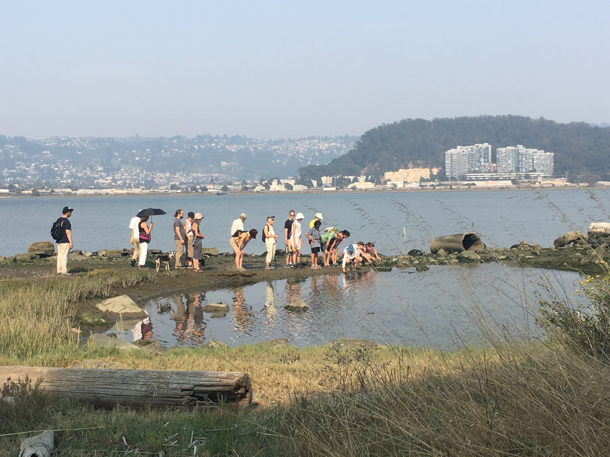 Study diverse ecosystems - The Bulb features salt marshes, mudflats, rocky shore, upland, and beach. Love the Bulb sponsors nature walks to help you enjoy and study these important San Francisco Bay ecosystems.