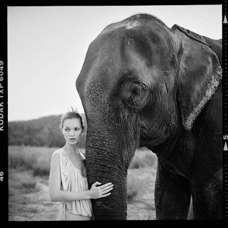 elephant-fashion-photography.jpg