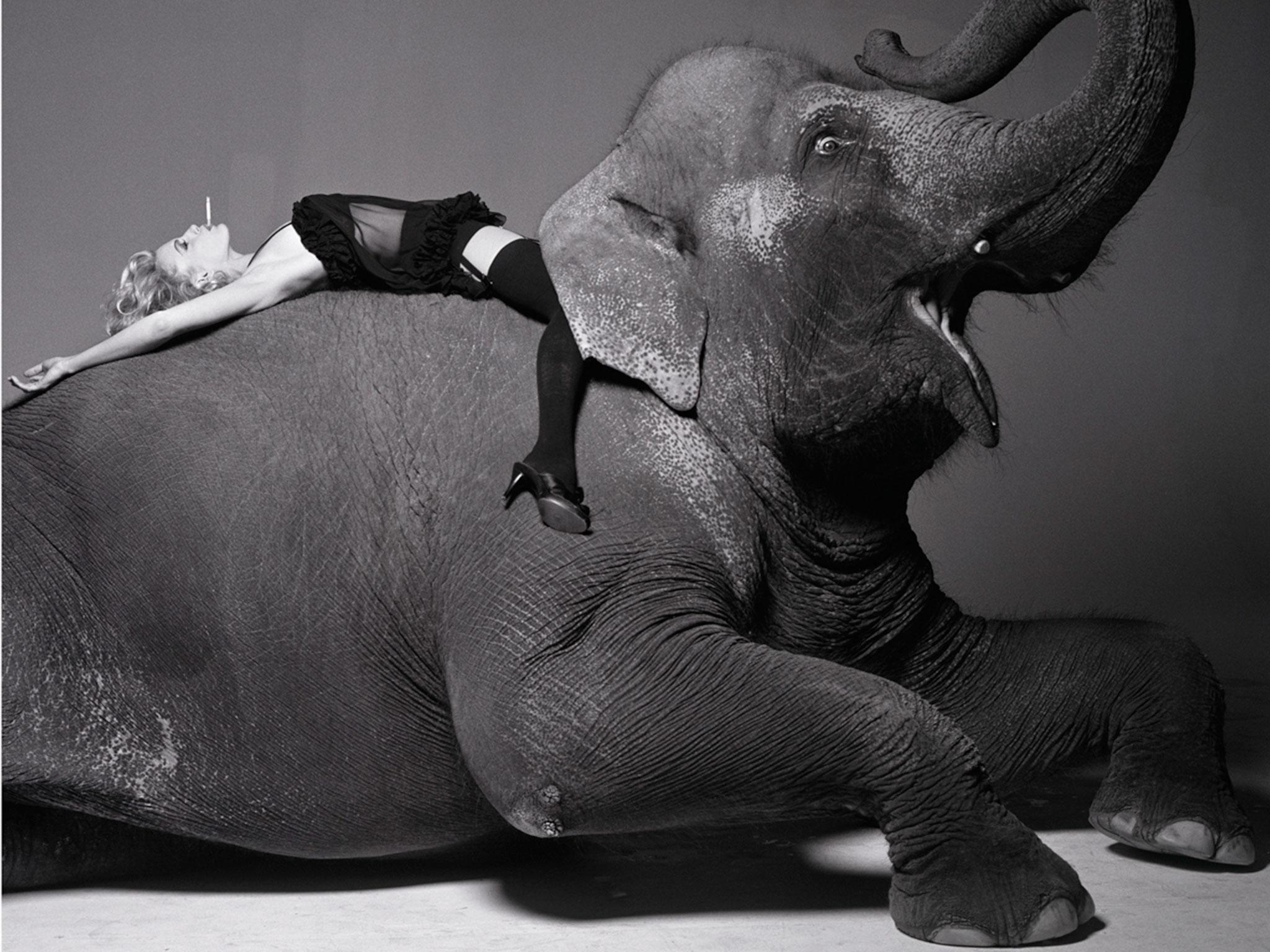 elephant-fashion-editorial-photography.jpg