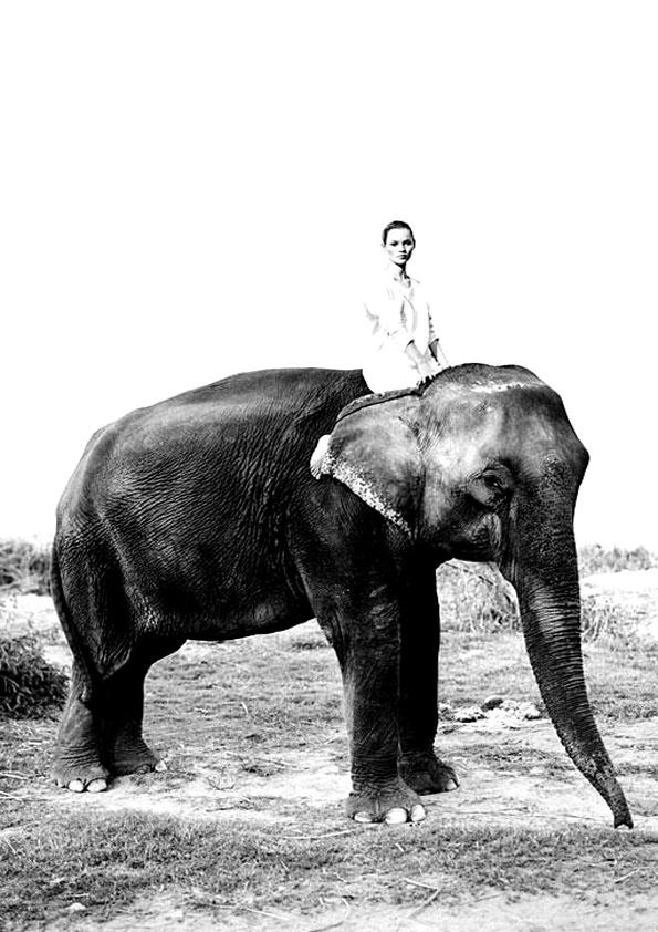 kate-moss-elephant-fashion-photography.jpg